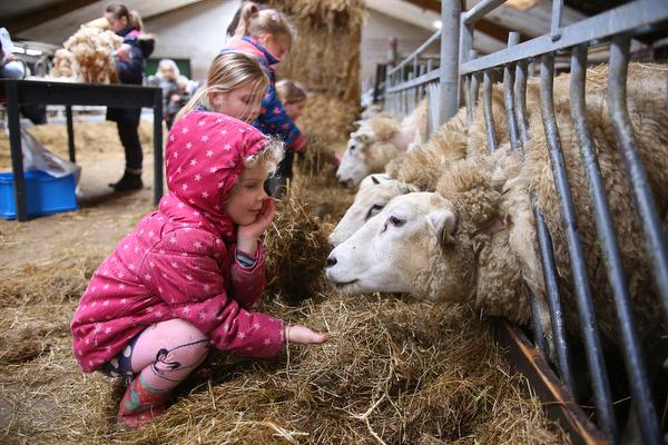 Kinderen van Kidswereld in Weesp leren van alles over schapen en wol