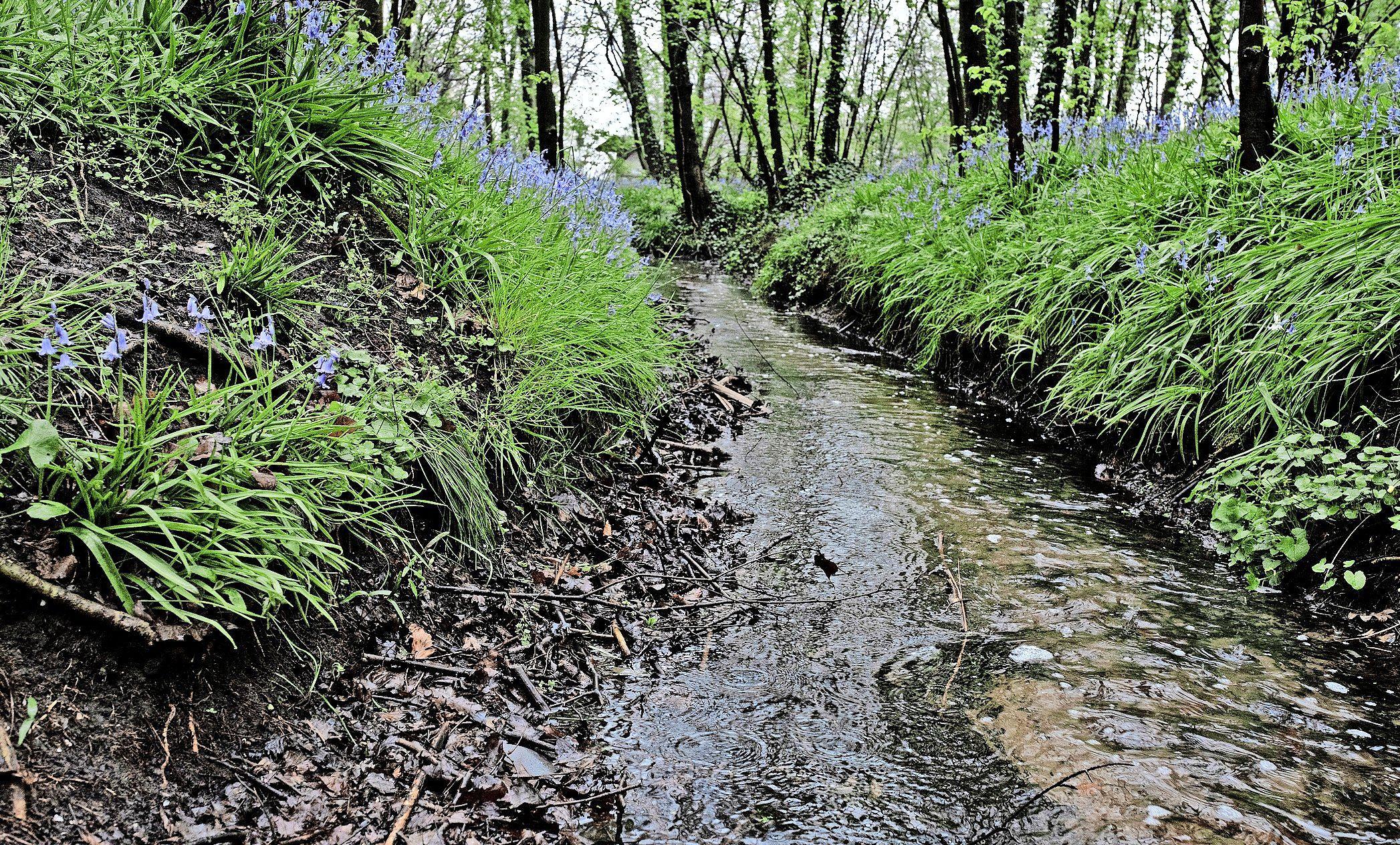 Een wandeling door het heden en het verleden langs duinrel Scheijbeek als eerbetoon aan Gorters epos 'Mei', geschreven in Huize Beeckzangh