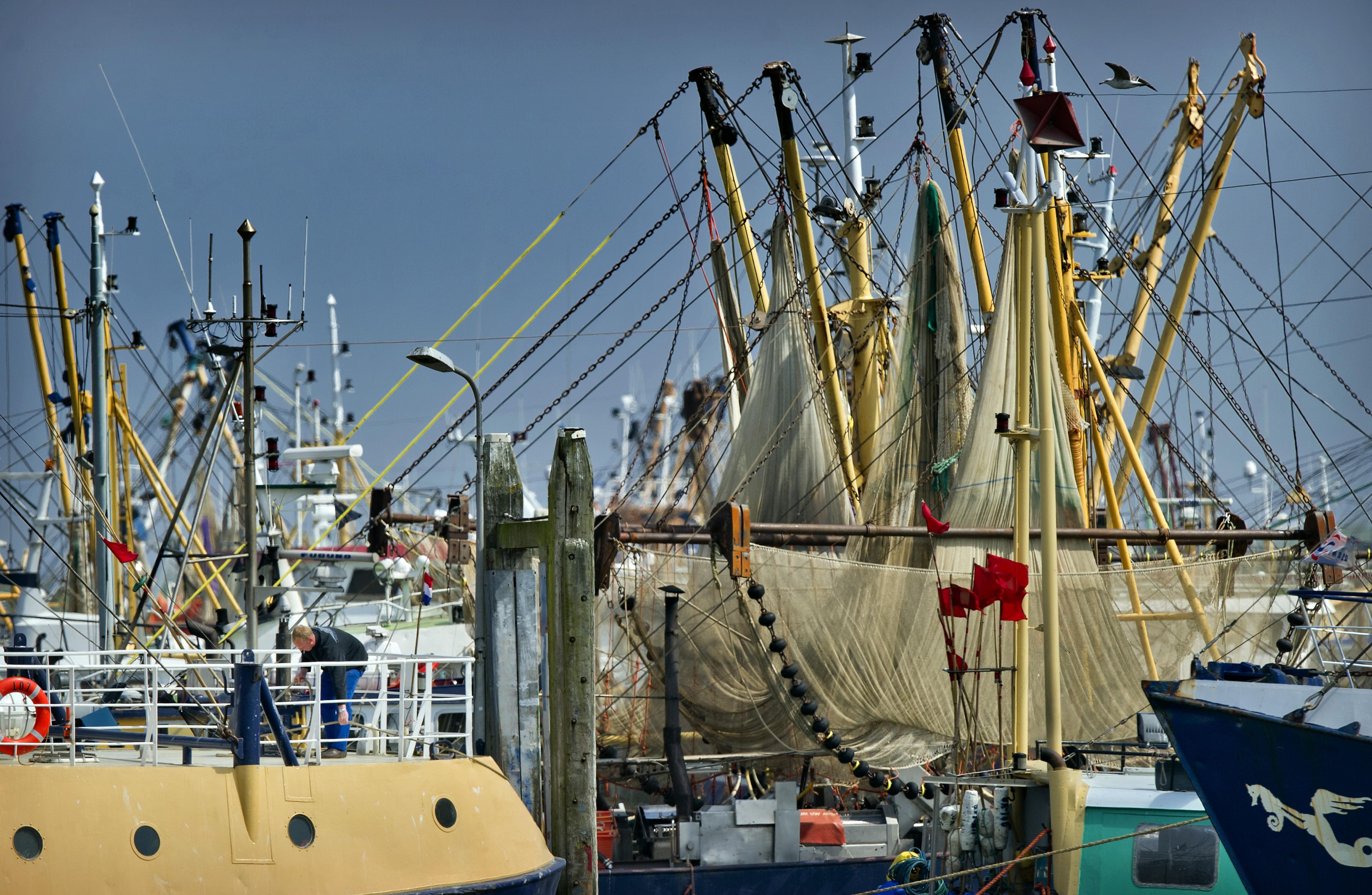 'Veel te lang op garnalen gevist in beschermd gebied Waddenzee en Noordzee'