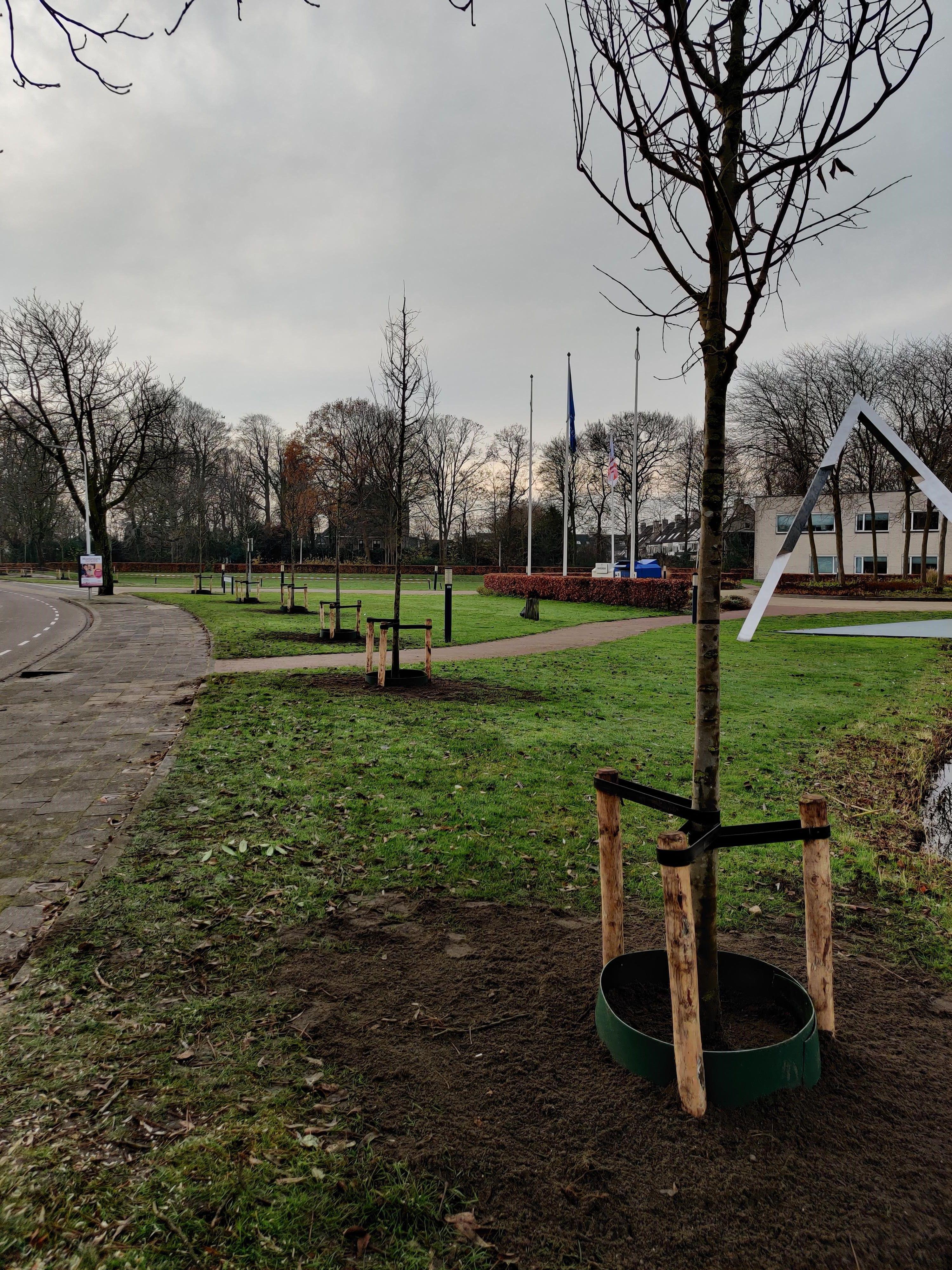 Eerste nieuwe bomen aan Wilhelminalaan Sassenheim