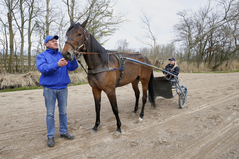 Pikeur Hugo Langeweg jr. wil met tiental paarden uitwijken naar Zweden om te koersen maar krijgt zijn dravers niet gekeurd: 'Inkomsten uit prijzengeld zijn een extraatje'