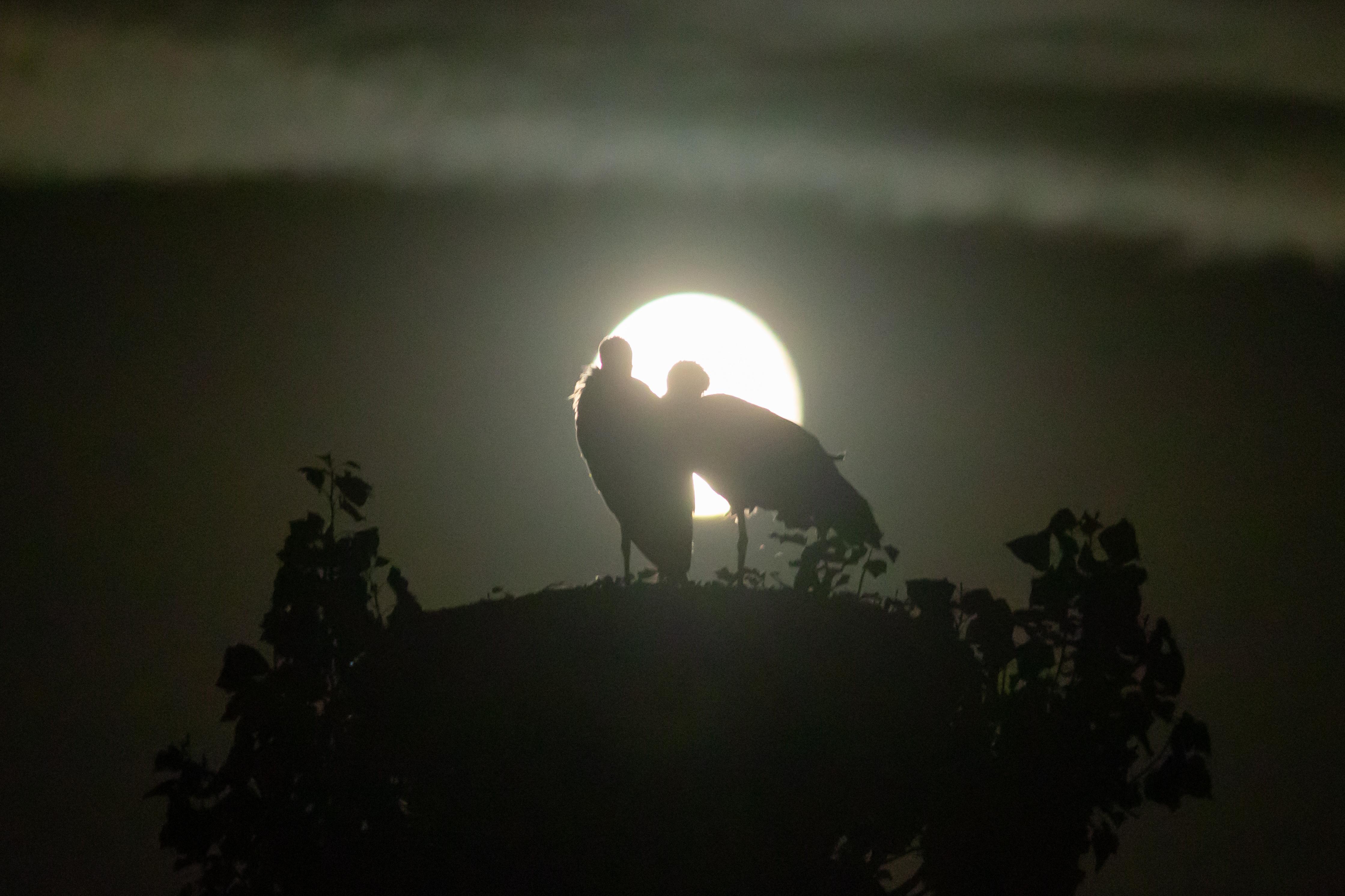 Liefde bij maanlicht; nog even genieten van elkaar in een 'empty nest'