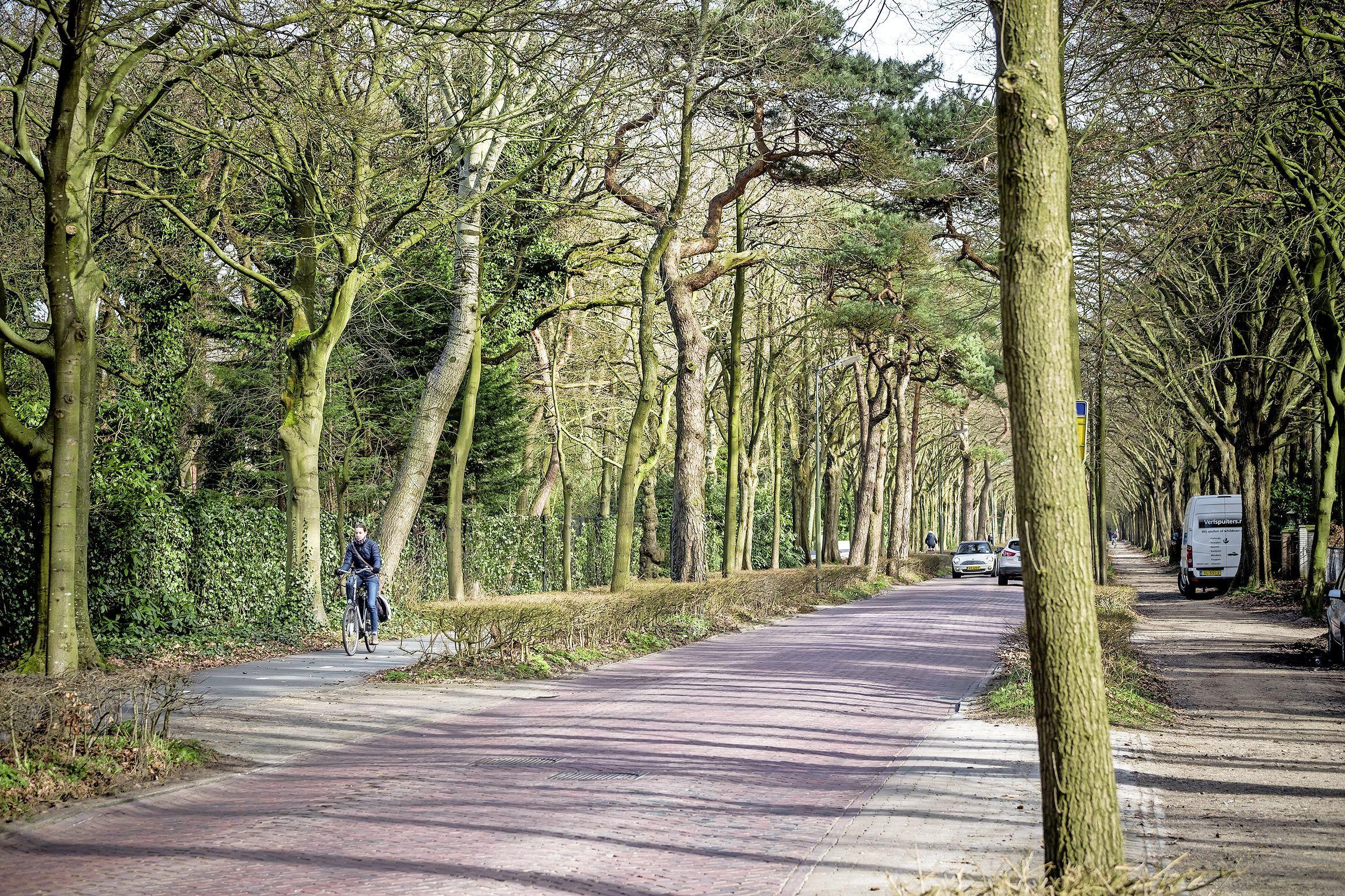 Bewoners van de Eeuwigelaan en de Buerweg in Bergen mogen beperkt bouwen op hun perceel. De gemeente mag een bewoner van de Buerweg daarvoor in natura compenseren, zegt de rechter