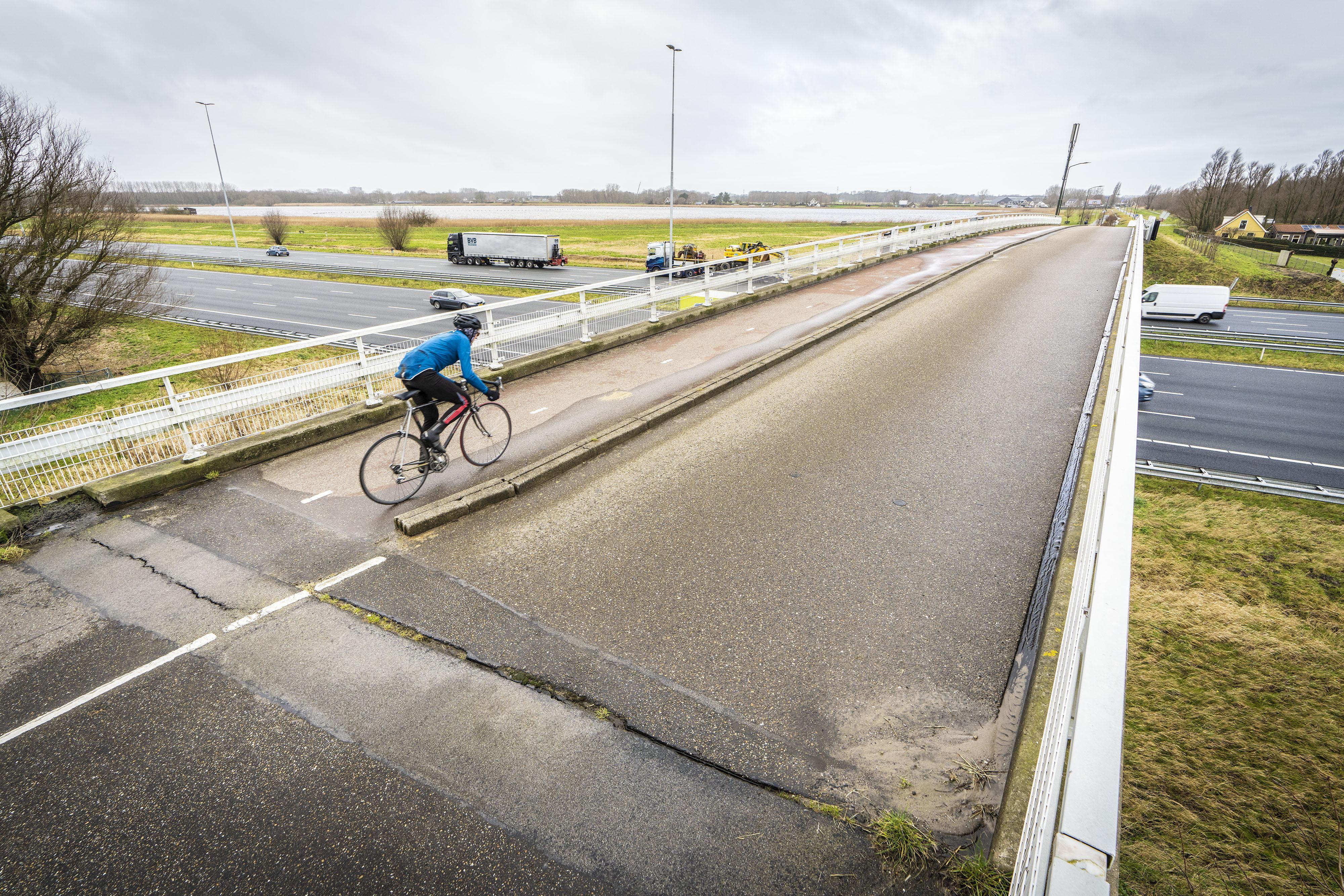 Pleidooi voor fietsecoduct over de A4 voor reeën, hazen en marterachtigen tussen het Groene Hart en de kust