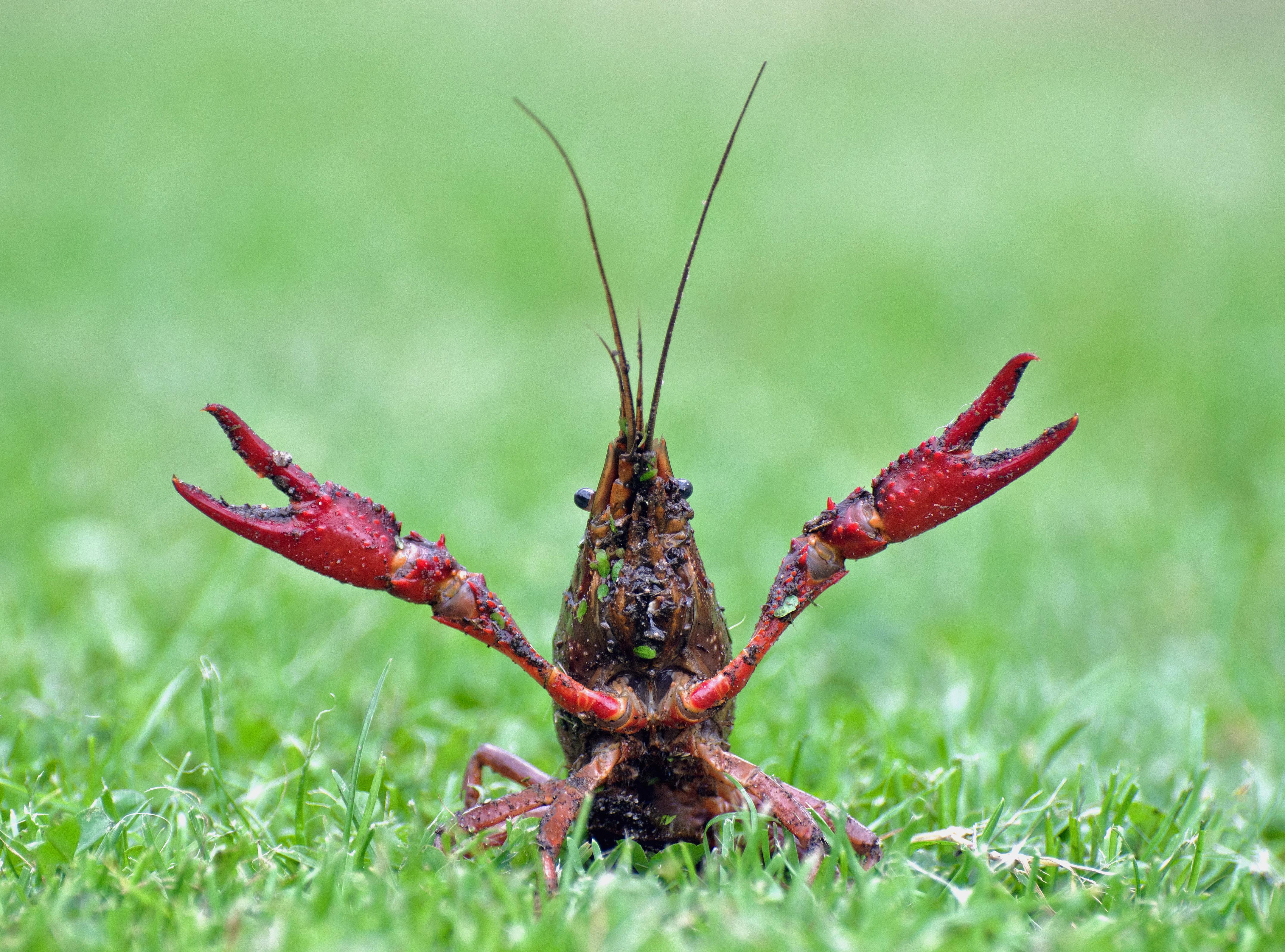 De rode monstertjes die alles opeten wat ze tegenkomen | column Geeke Remmelts