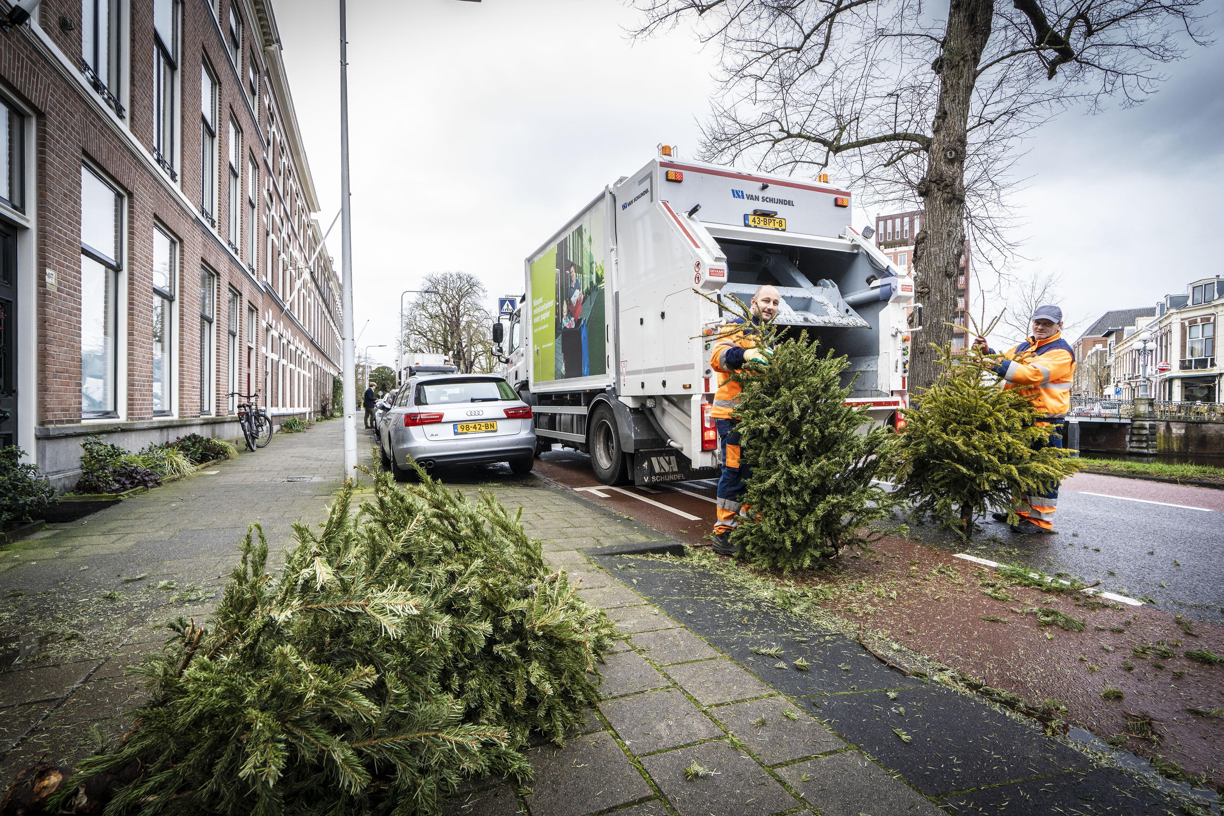 Recordaantal kerstbomen in Leiden van stoepen en inzamelpunten geplukt