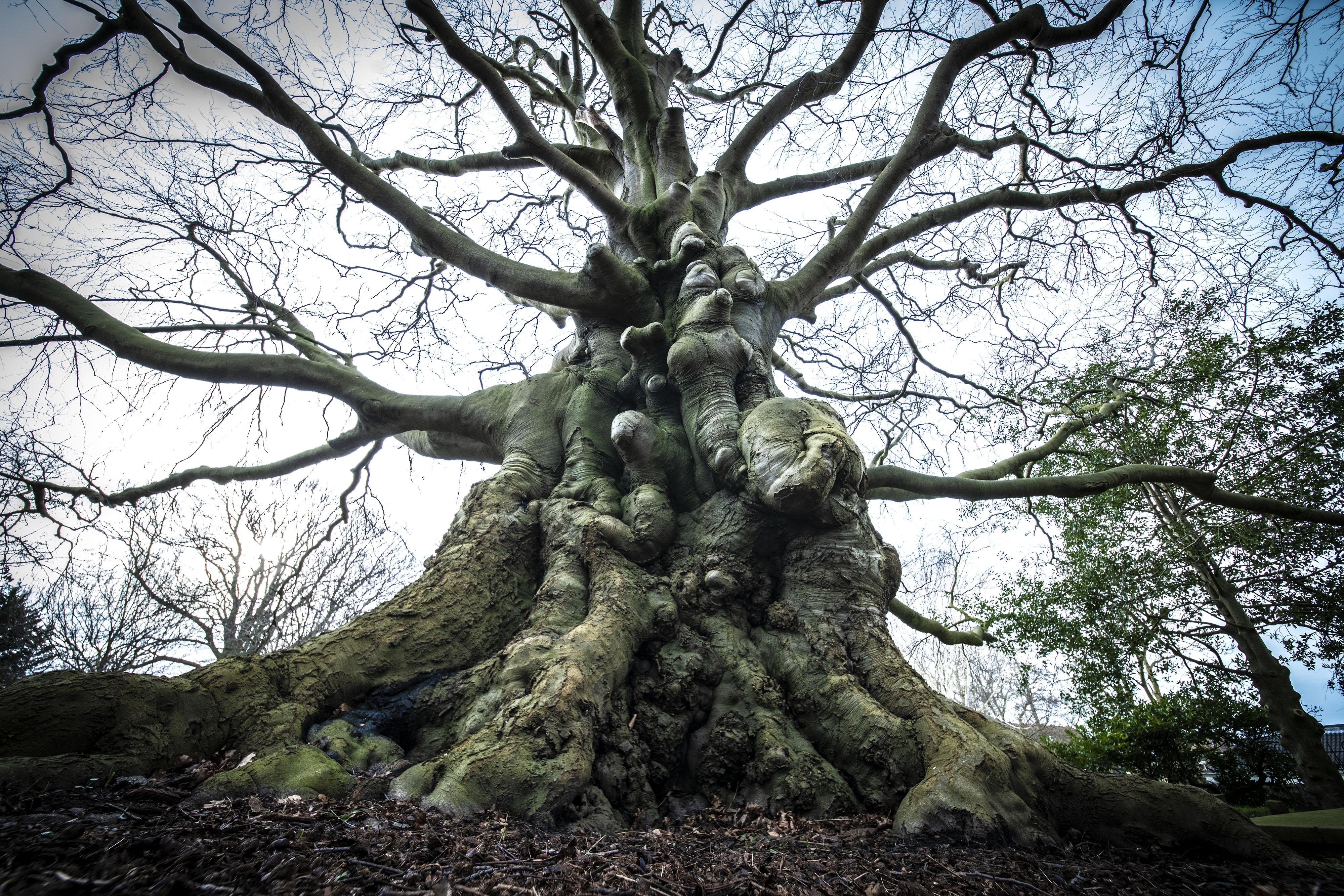 Leidse bomen krijgen beschermde status, en niet alleen op gemeentegrond