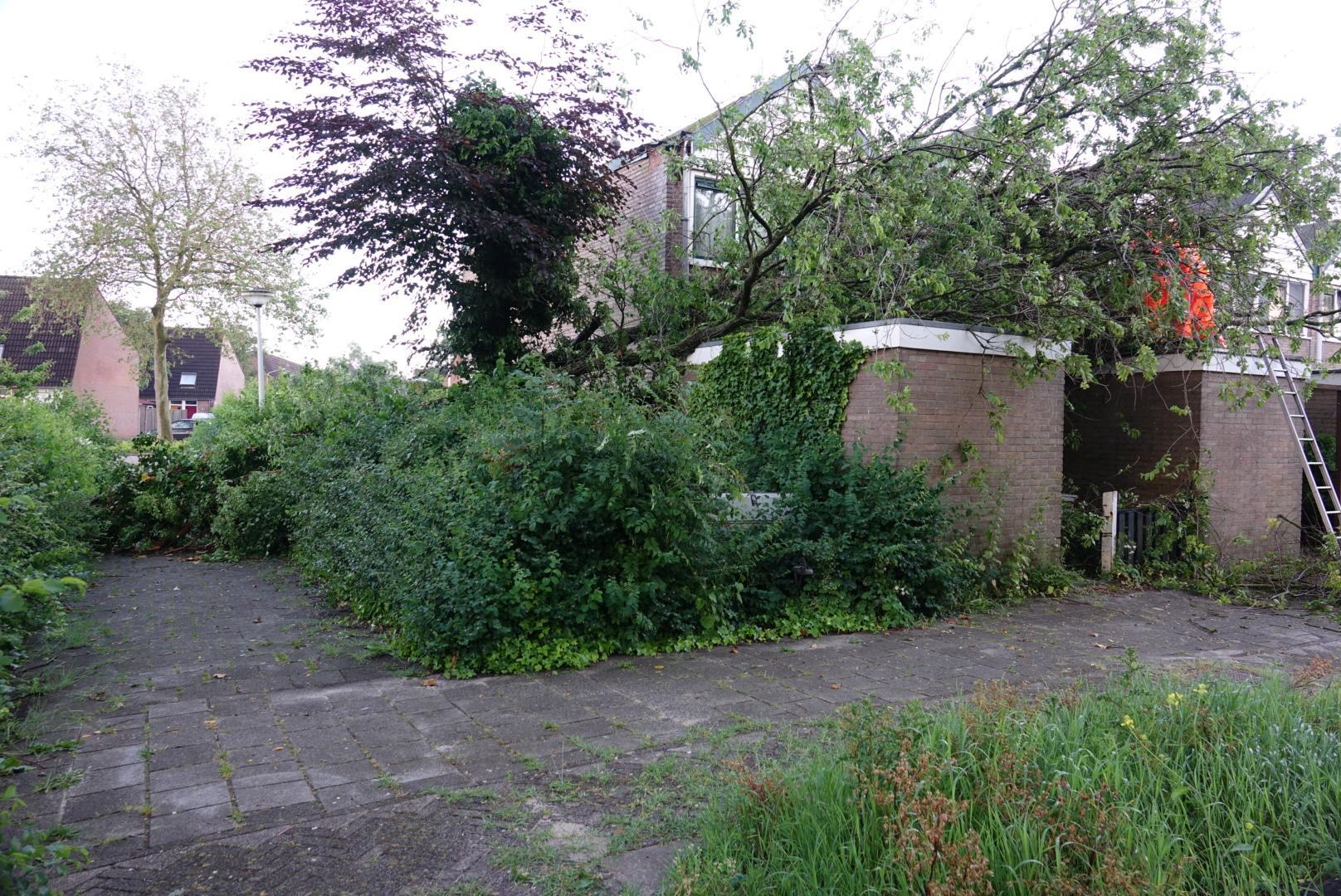 Noodweer slaat ook toe in Krommenie: boom valt op drie schuurtjes en dak van woning