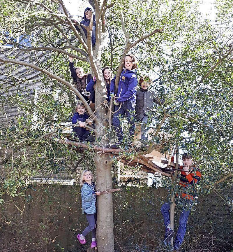 Gemeente biedt excuses aan voor weggehaalde boomhut: 'We bezorgen een brief en buitenspeelgoed'