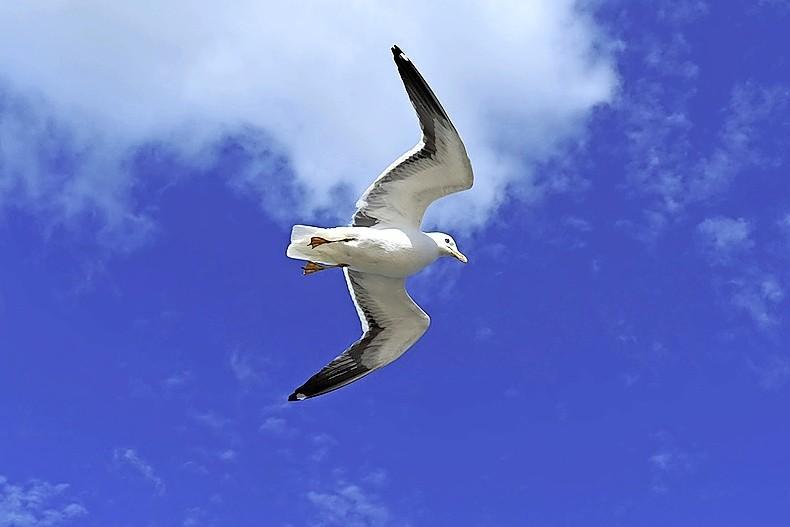 Ze zien er snotterig uit en vaak hebben ze diarree, ook in de IJmond heerst vogelgriep