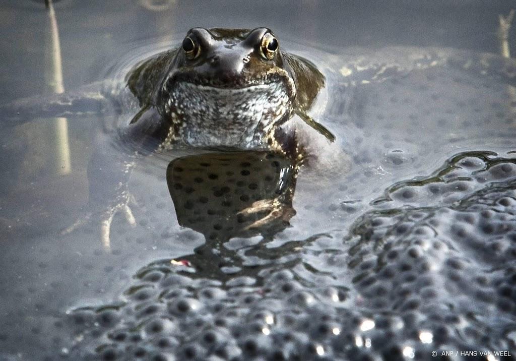Nieuw meldpunt voor zieke of dode reptielen, amfibieën en vissen