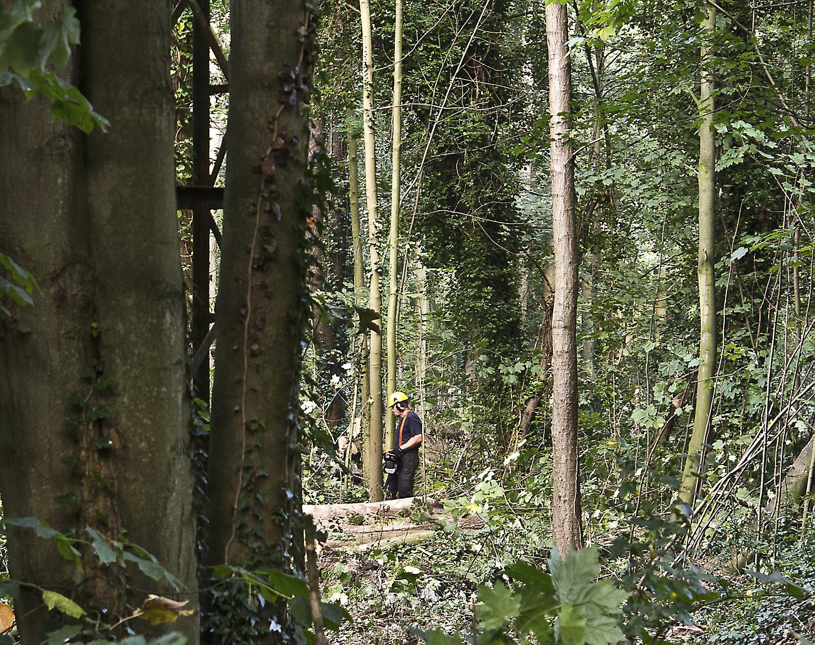Bomenstichting mag kritisch meekijken bij Zaanstad
