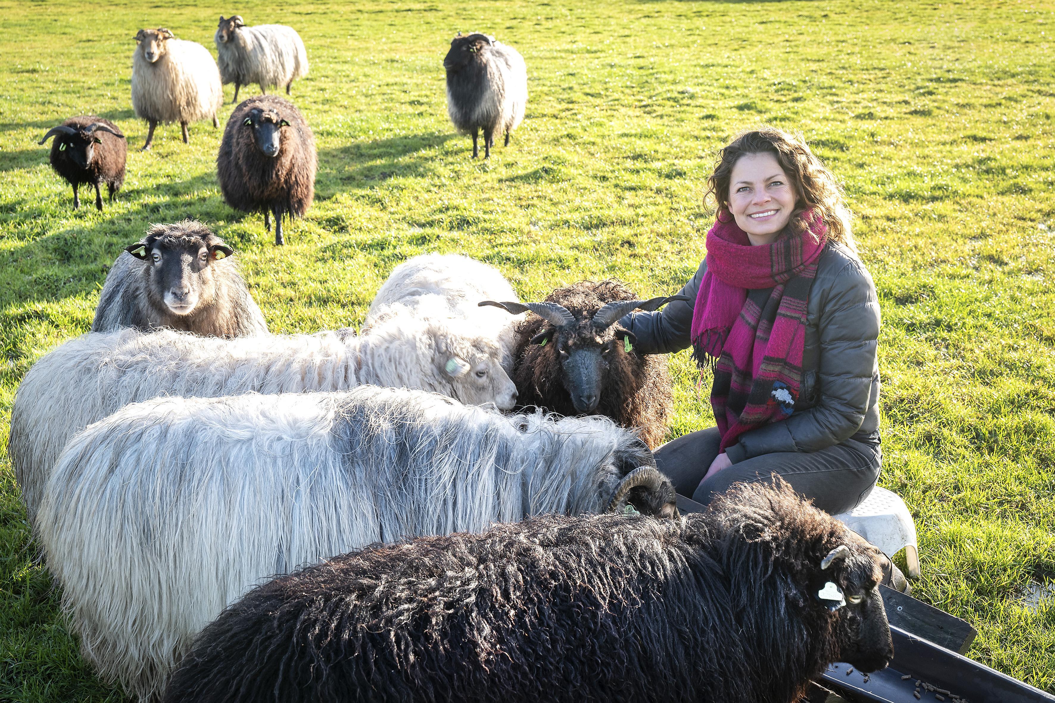 Wol uit een wei in Vijfhuizen, 'Natalie Wool' heeft haar eigen schapen