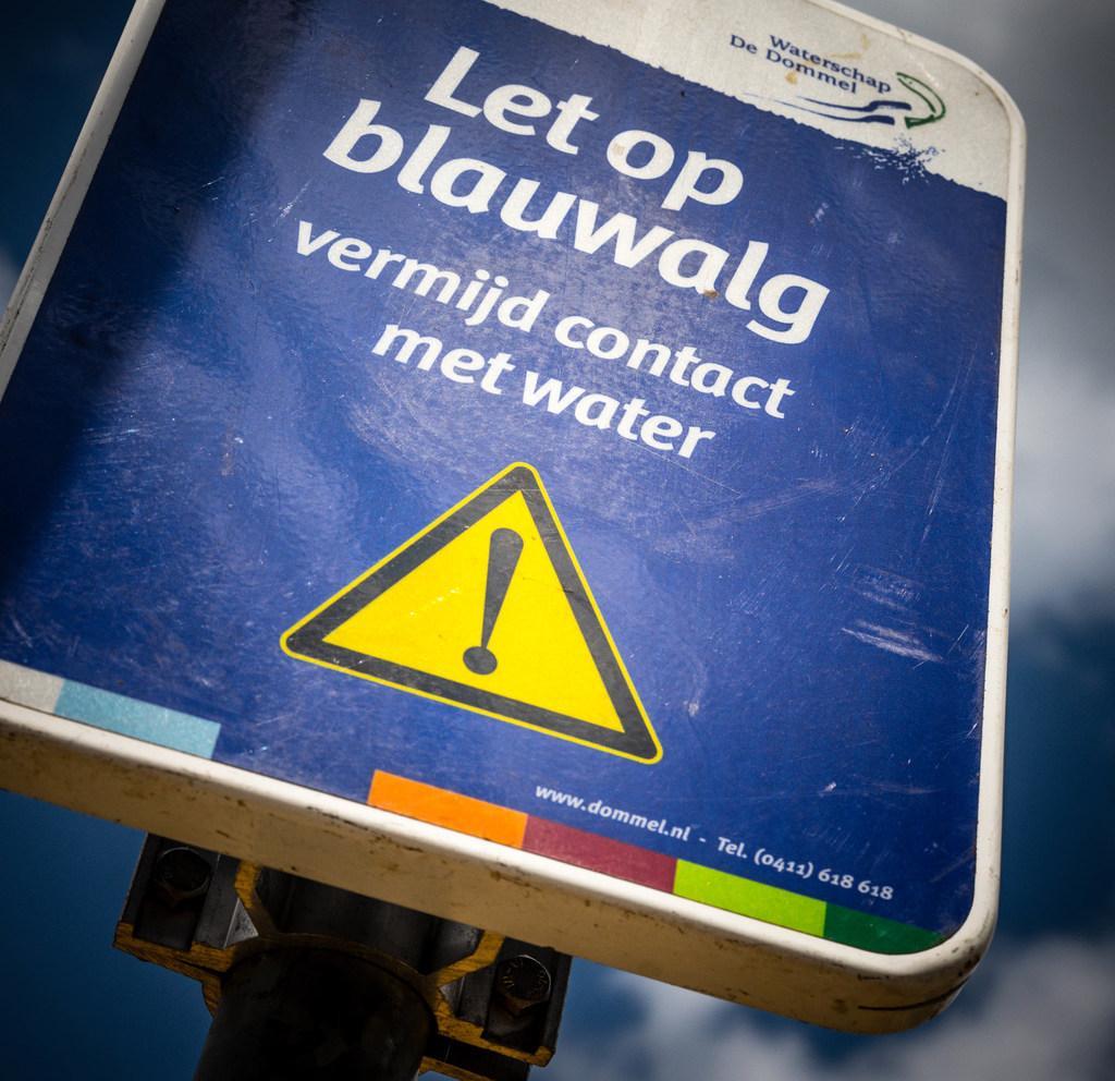 Raadsvragen HAP over blauwalg in Haarlemmermeerse Bos: 'Is het beluchtingssysteem geplaatst in het meertje?'