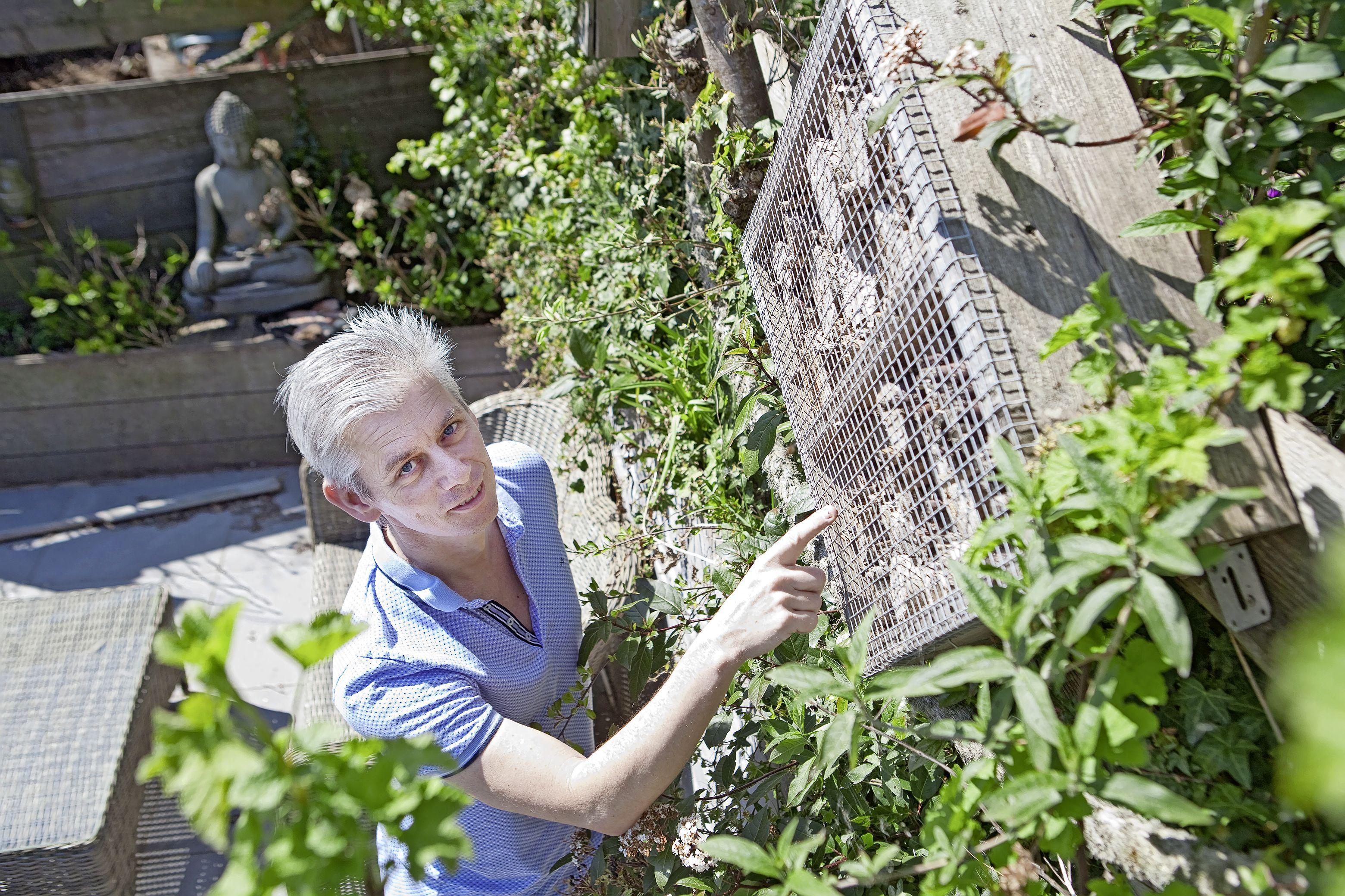 'Harig achterlijfje, zie je hem vliegen?': imker Eddy speurt in zijn eigen achtertuin mee tijdens Nationale Bijentelling