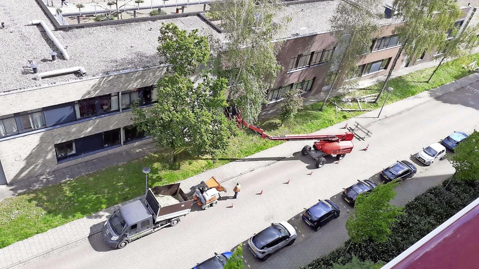 'Bomen bij verpleeghuis voor onze ogen gekapt'; Buurt rond Vivium De Hogeweyk in Weesp boos en verdrietig over kaalslag in broedseizoen vogels: Maar niemand heeft bezwaar ingediend