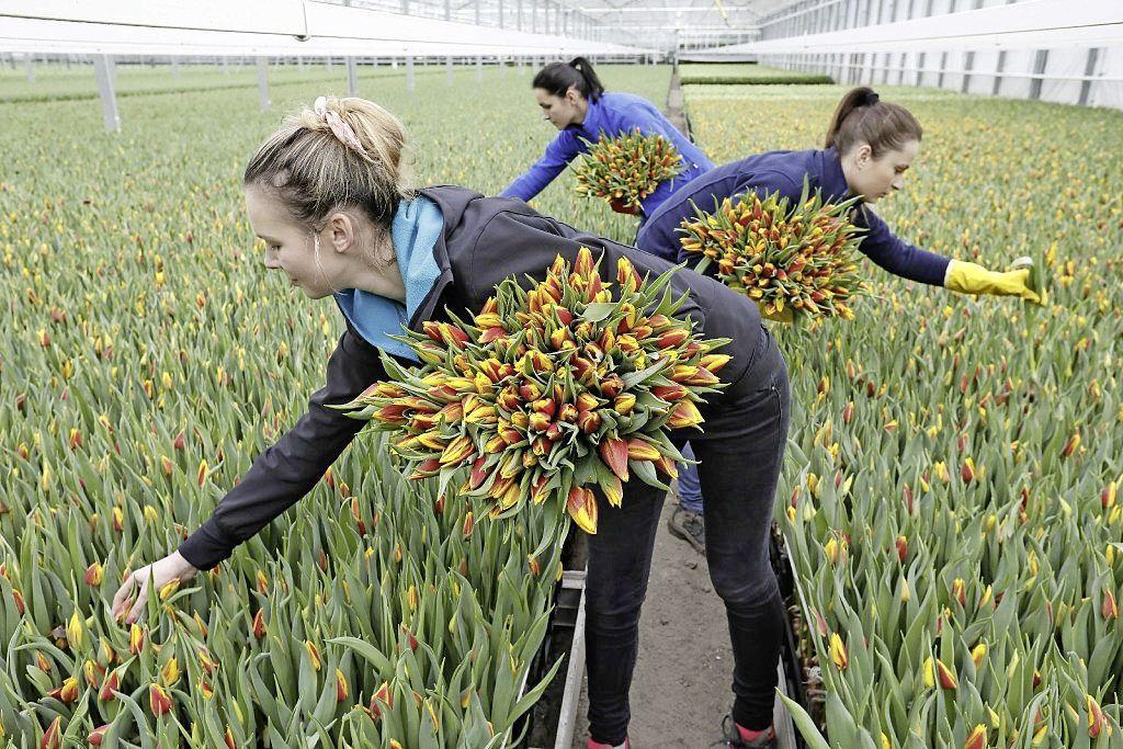 Drechterland overweegt toeristenbelasting per arbeidsmigrant: die maakt ook gebruik van openbare voorzieningen