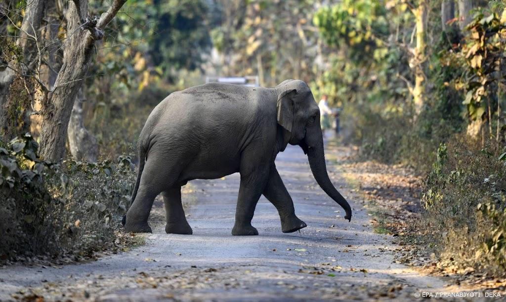 Onderzoek in India naar dood door bliksem getroffen olifanten