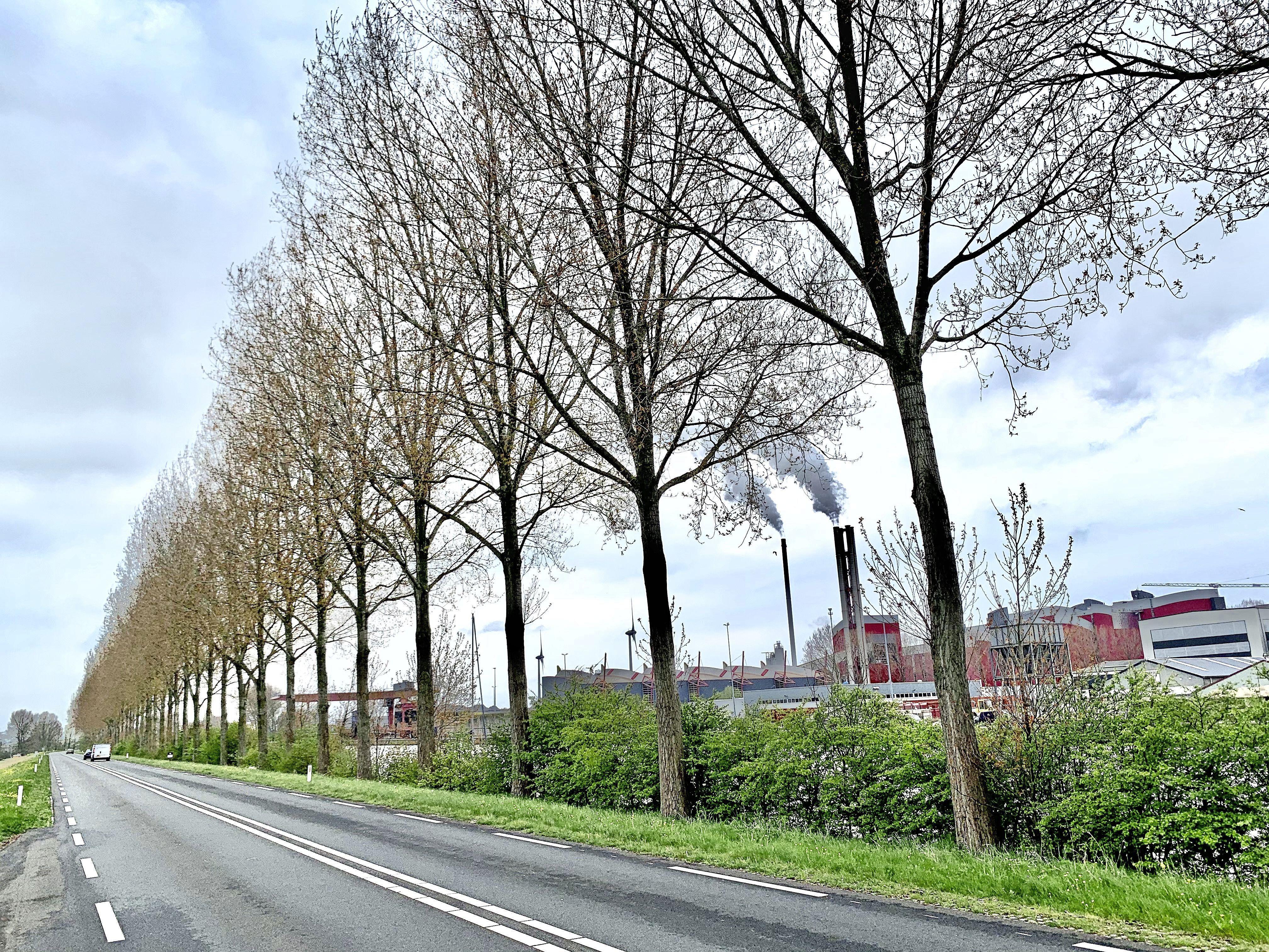 Een hele bomenrij van 5,5 kilometer langs het Noordhollands Kanaal moet weg, 500 populieren. Ze staan te dicht op de weg