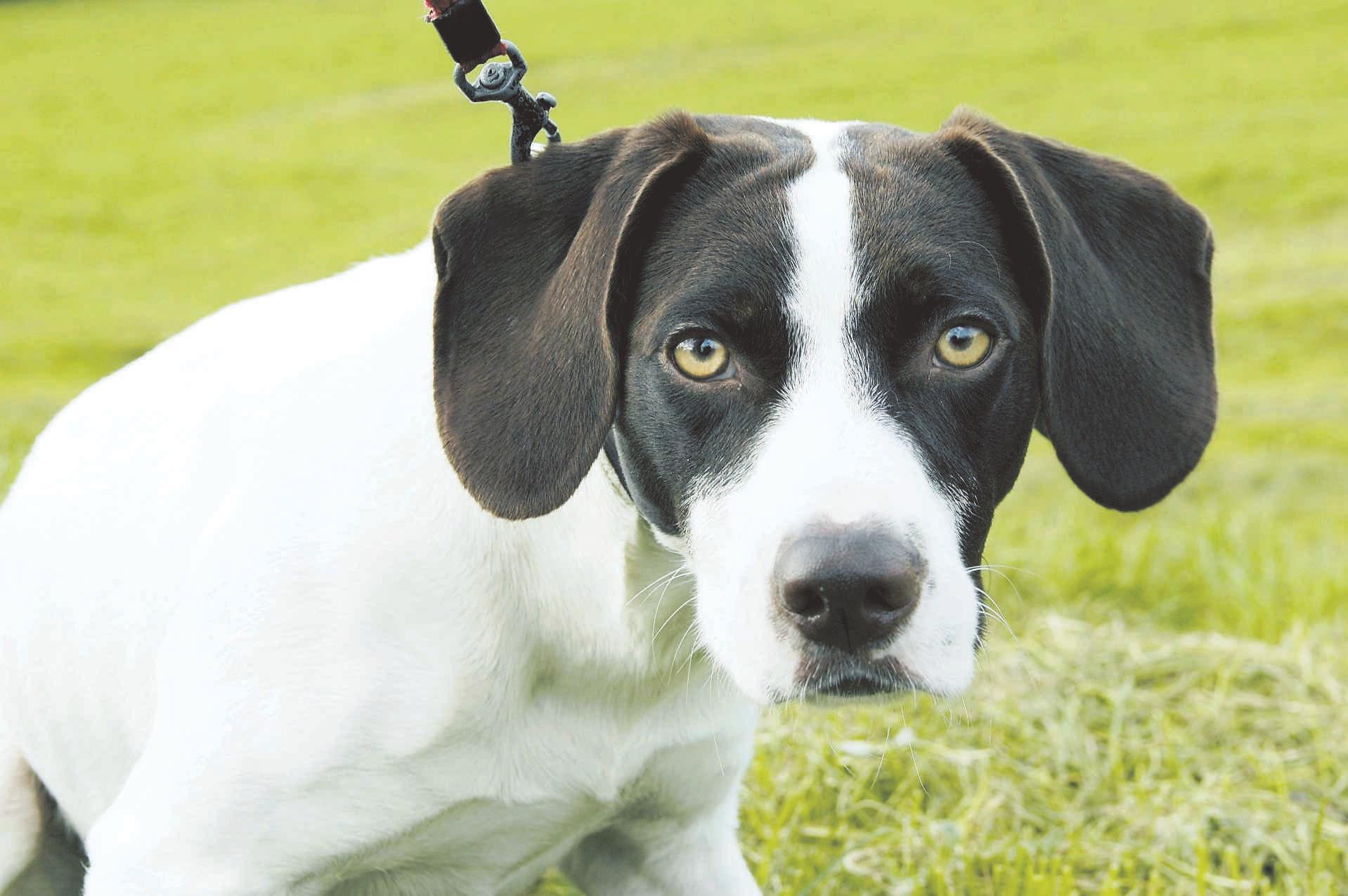 Hondenbezitters mogen politie helpen, West-Friezen krijgen speciale clinic om te leren signaleren en observeren