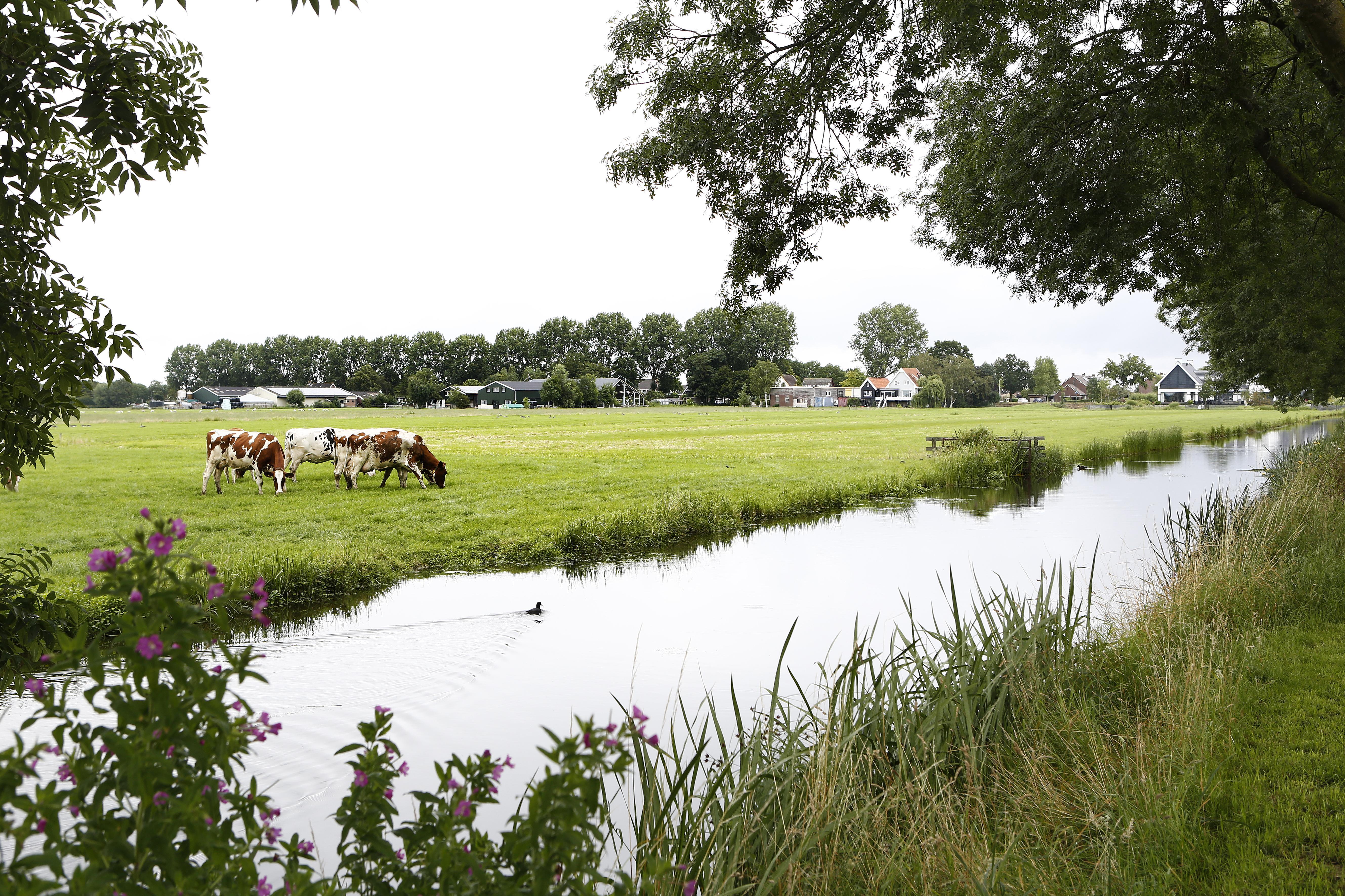 Noord-Holland zal honderden Wijdemeerse woningen in de polder niet dwarsbomen, tot ergernis van de provinciale politiek