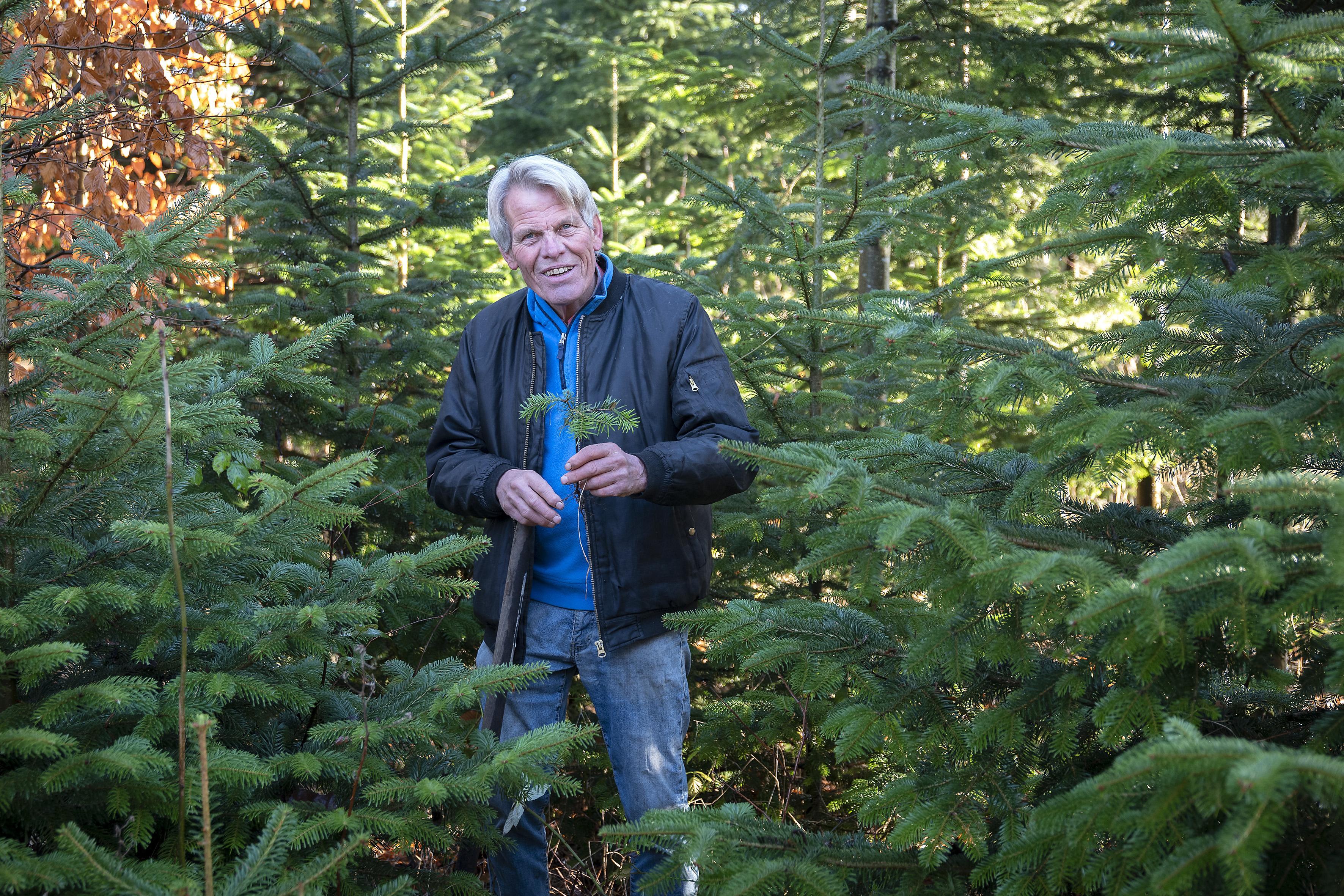 Henk Haan, vijftig jaar hovenier in Santpoort-Noord: 'Ik doe het niet voor de show, ik doe het voor de planten'