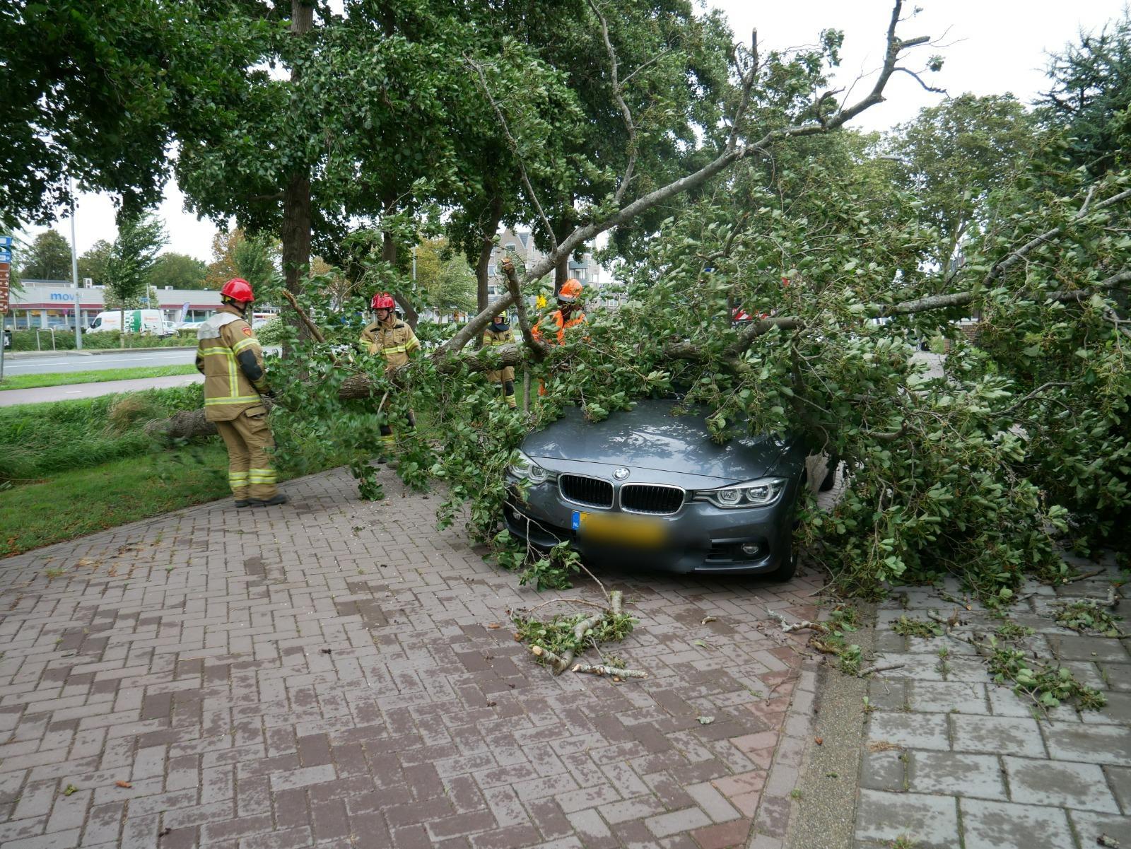 Schade door storm Francis: boom valt op auto in Akersloot
