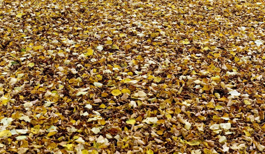 Waterzak moet in Alkmaar uitdroging jonge bomen voorkomen