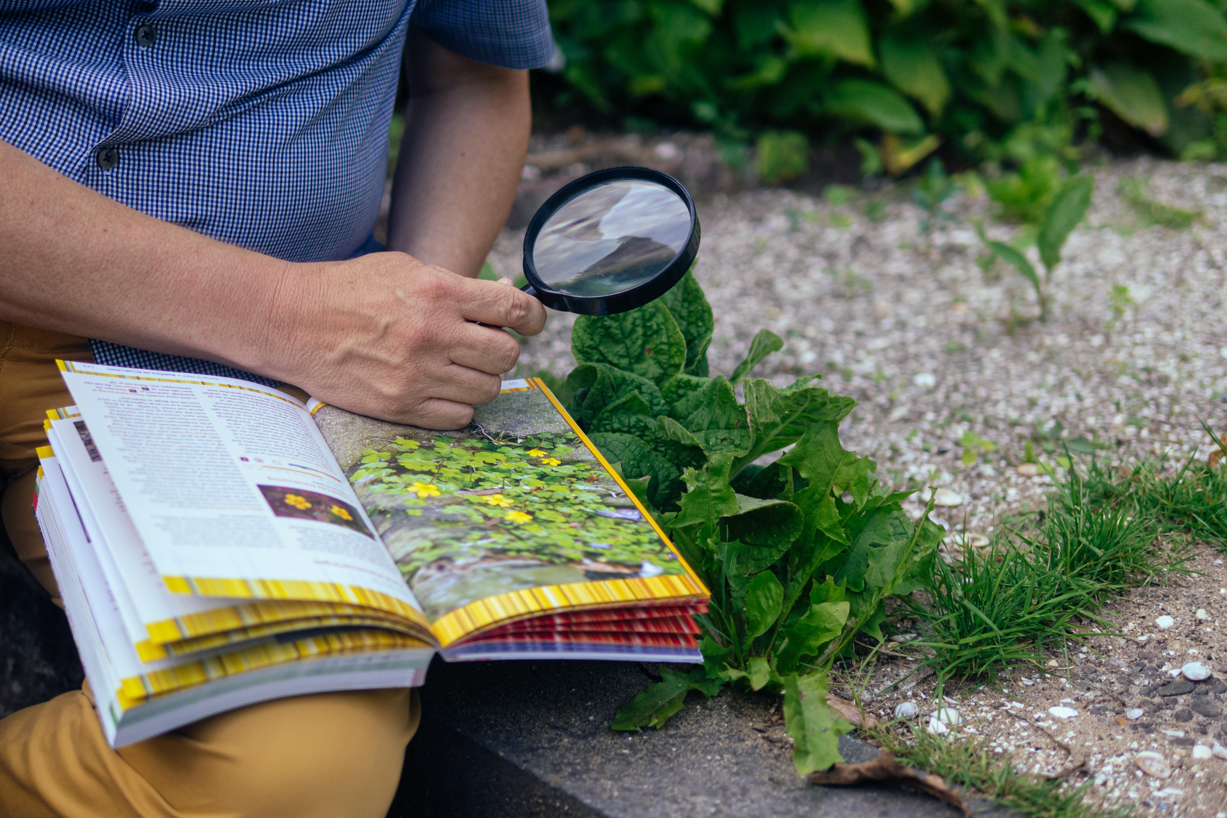 Studie van planten heeft aandacht nodig om weer te floreren