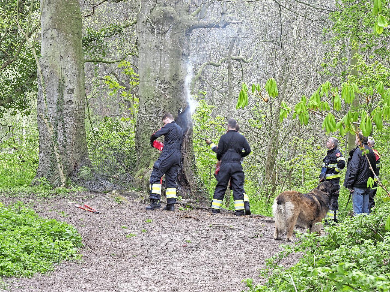 Fik in holle boom; brandweer moet tot drie keer terug. Het was alsof een schoorsteen in de hens stond