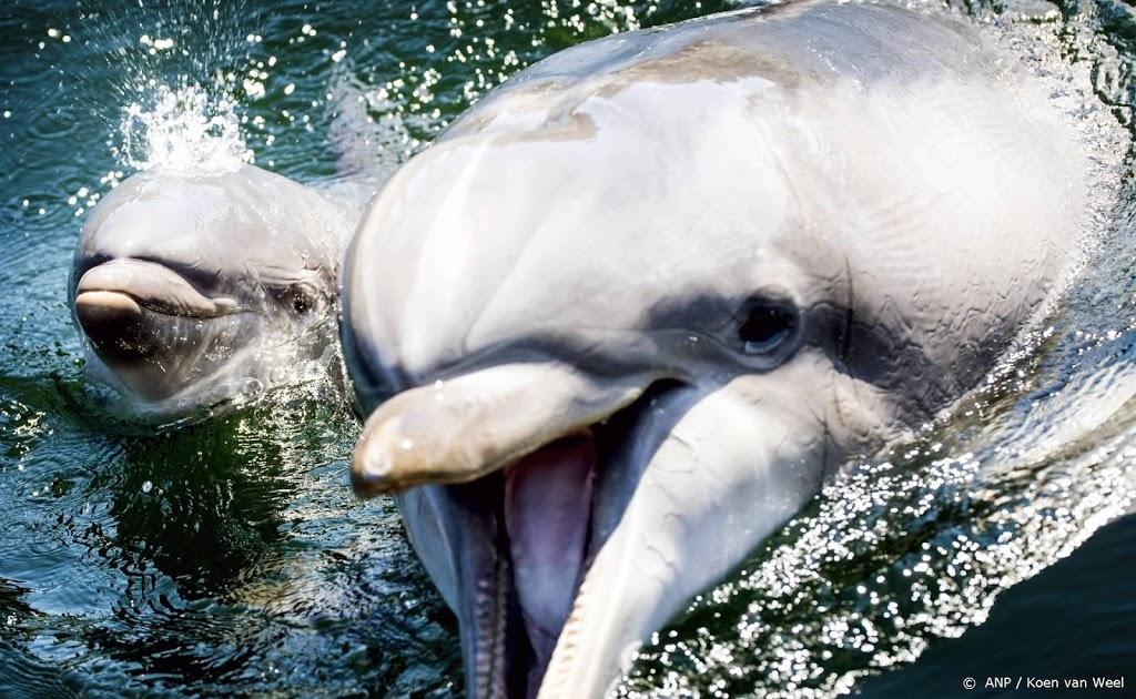 Verzet tegen verkoop dolfijnen Dolfinarium groeit