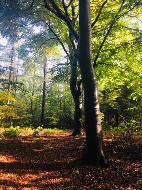 Soest opnieuw akkoord met woningbouw in eeuwenoud bosgebied Oude Tempel, maar wethouder belooft: Bomen blijven staan tot ook de Raad van State zijn ja-woord geeft