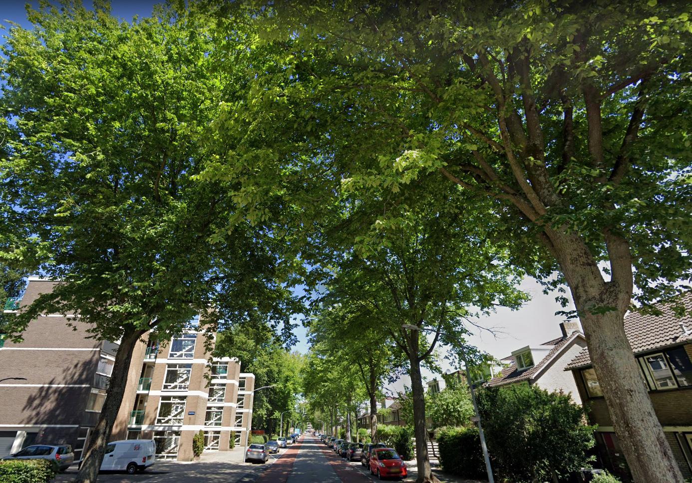 Alle Haarlemse bomen op leeftijd krijgen tijdelijke bescherming tegen kap