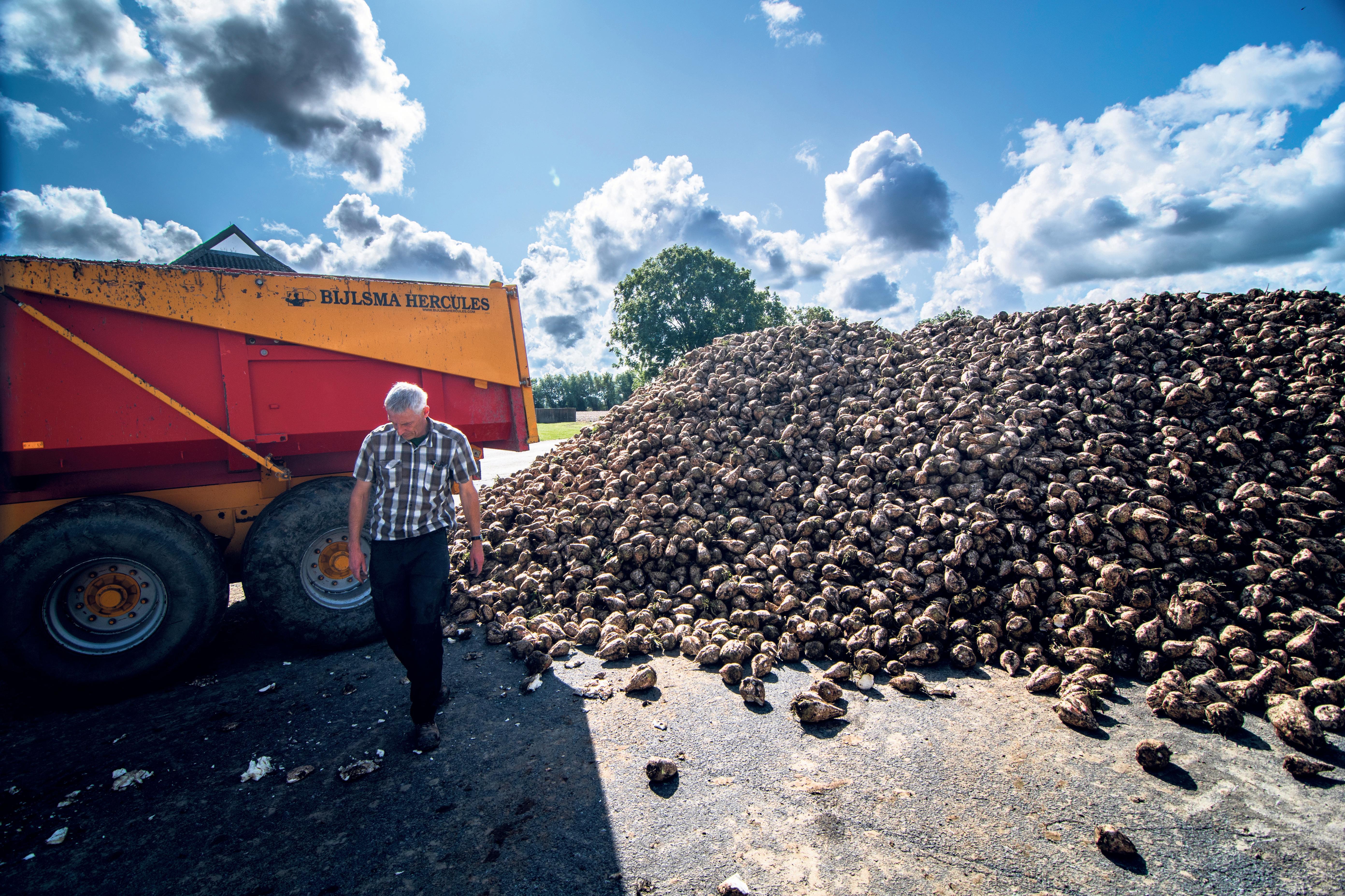 Papier van suikerbietenpulp. Crown Van Gelder in Velsen-Noord begint er volgend jaar mee. 'Hierdoor is een flinke afname van CO2-uitstoot en fijnstof mogelijk', stelt directeur Miklas Dronkers
