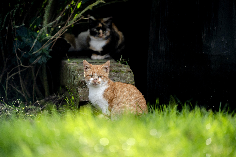 Proef met verplicht chippen van katten in Alphen aan den Rijn: 'Je voorkomt er een hoop ellende mee'