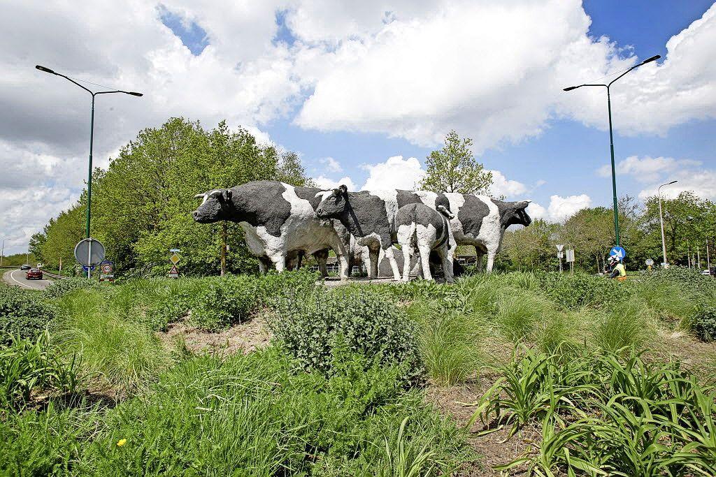 'Bosmaaier helpt koeienrotonde naar de filistijnen'. Woede van Eemnesser raadslid wordt niet gedeeld door college. 'Maaien volgens afspraak komt heus goed'