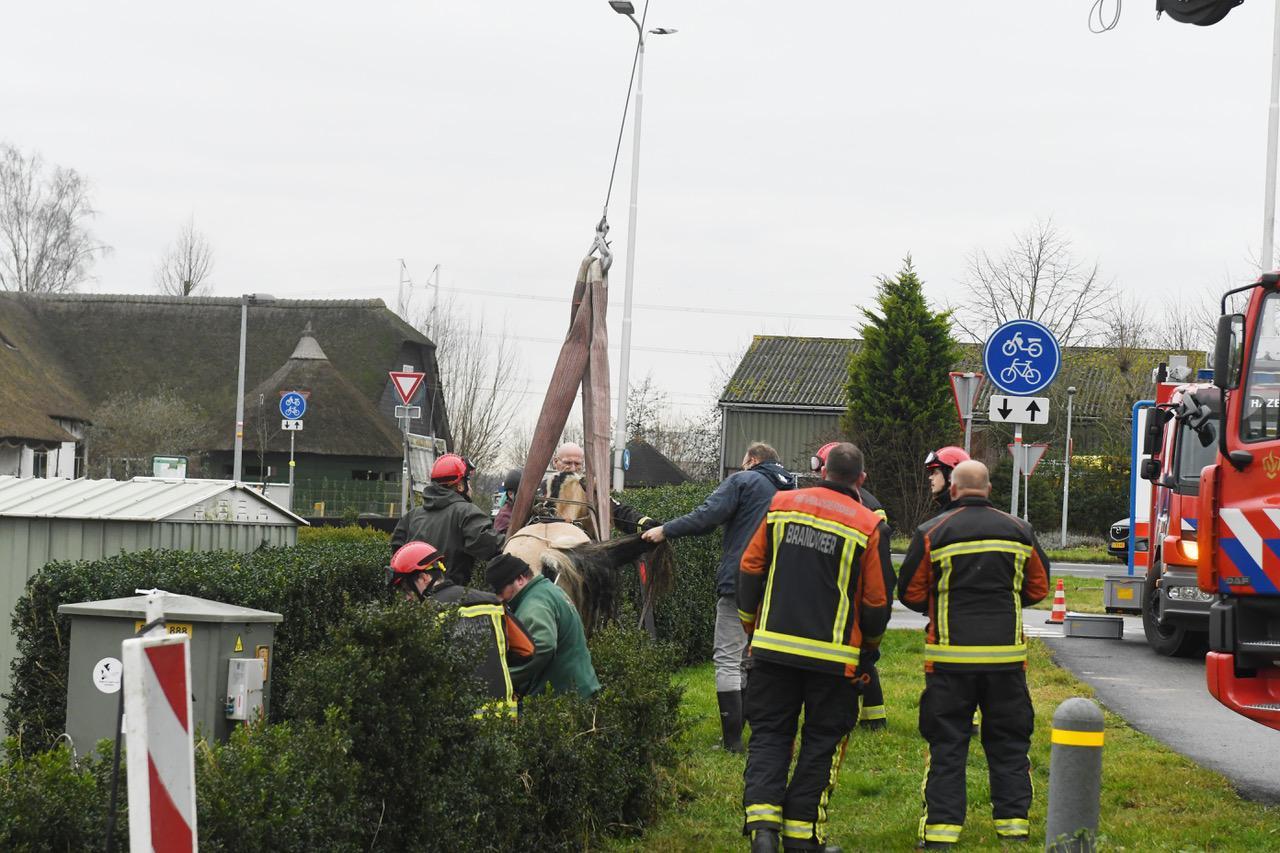 Paard na uur door brandweer uit sloot bevrijd in Hazerswoude-Dorp
