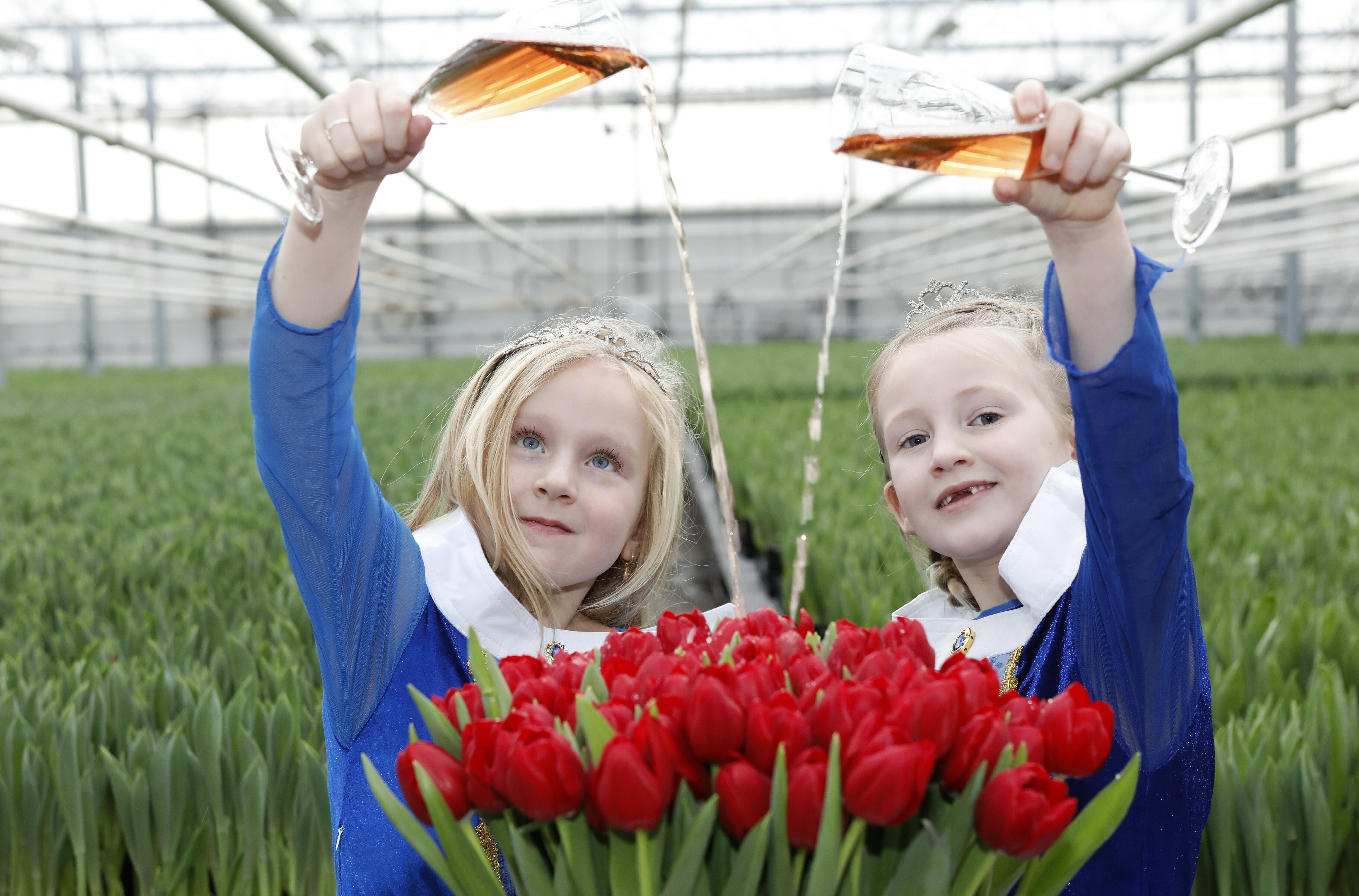 Ode aan de tulp: Nederlandse kwekers lopen voorop in innovatie en duurzaamheid