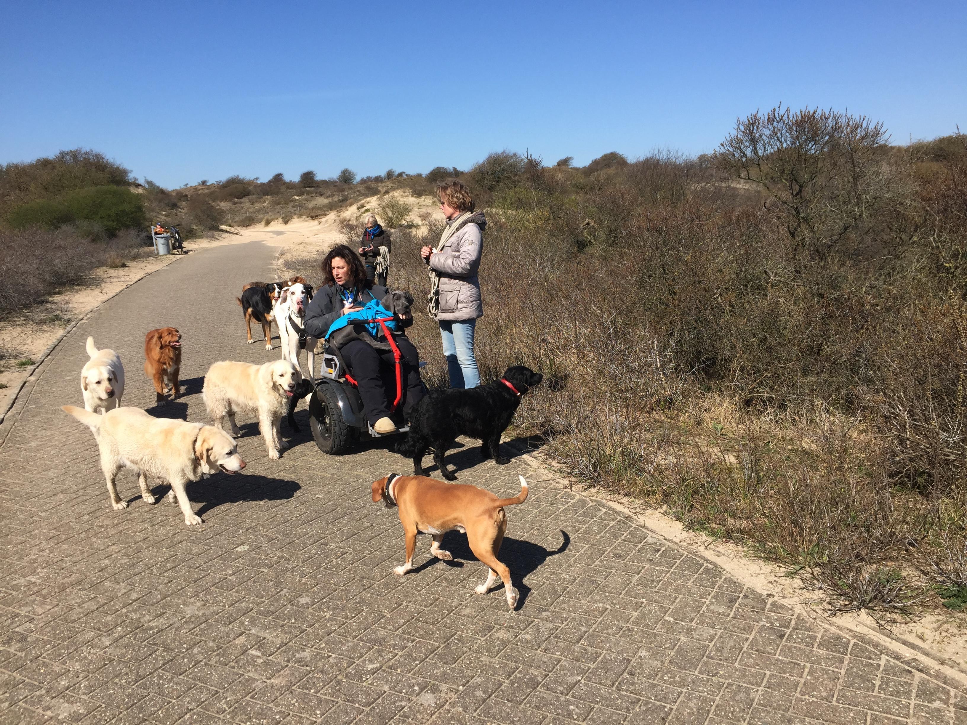 Paradijs voor honden op fietspaden door Nationaal Park Zuid-Kennemerland