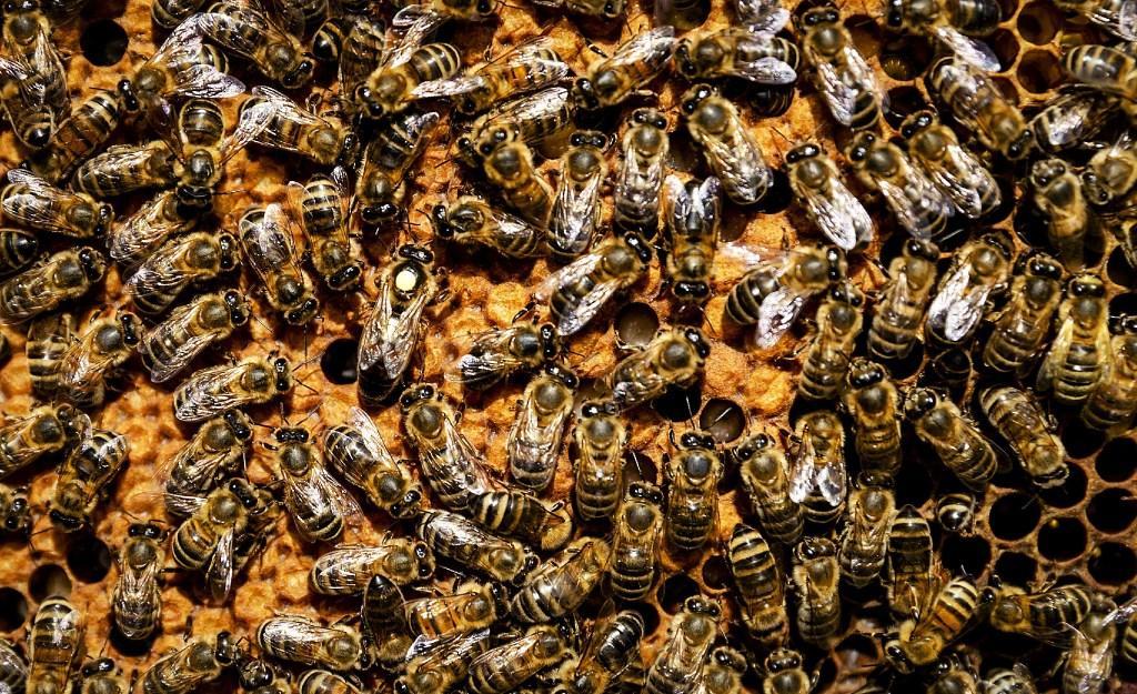 Bijvriendelijke gemeente Hollands Kroon zaait papavers, 'bermen niet slordig bijgehouden, maar mini-natuurreservaat'