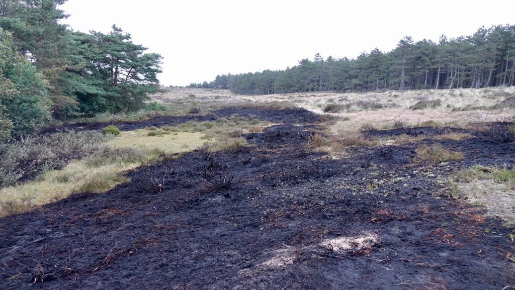 Brand in natuurgebied Bergen aan Zee is ontstaan door kampvuur. De politie is op zoek naar een groep jongeren