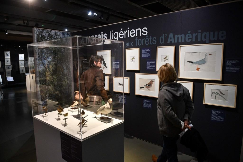 Teylers Museum worstelt met werk 'racistische vogelschilder'