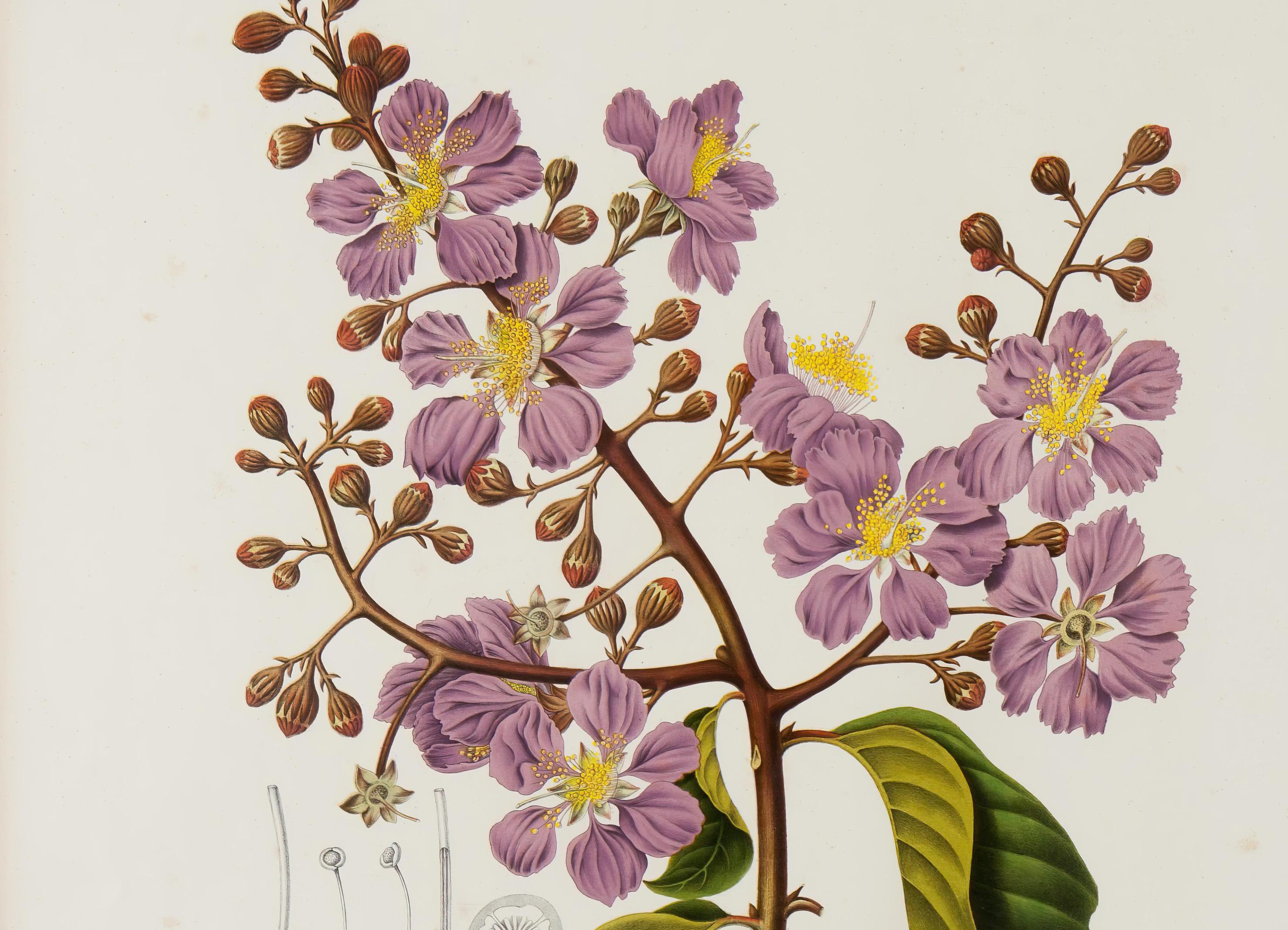 Hoola van Nooten in Teylers Musem Haarlem: boek met botanische illustraties levert cadeaus op van bewonderaars