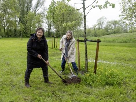 Zeventig compensatiebomen voor Park Zwanenburg