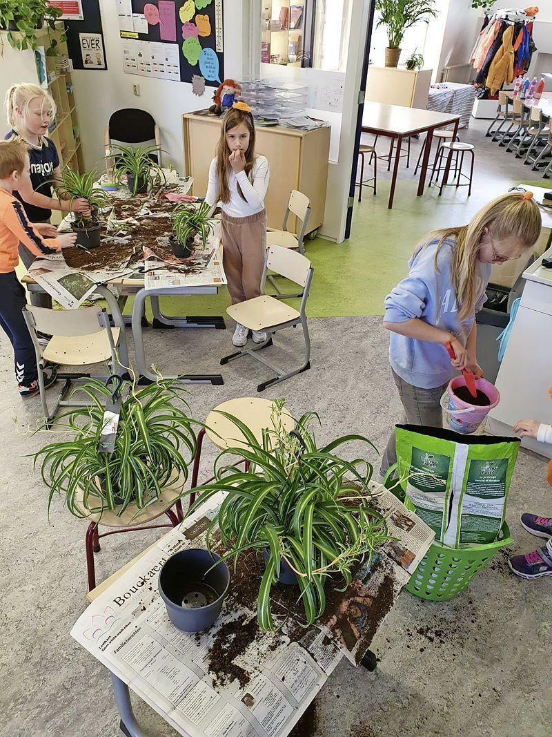Plant keert als minibos terug in het klaslokaal en Noordwijkse basisschool loopt daarbij voorop