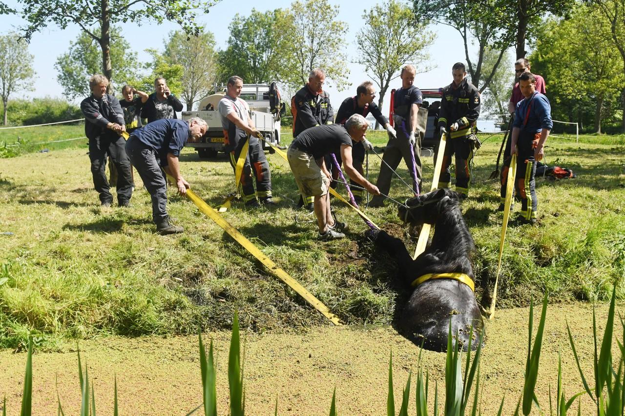 Brandweer en omstanders redden paard uit sloot Warmond