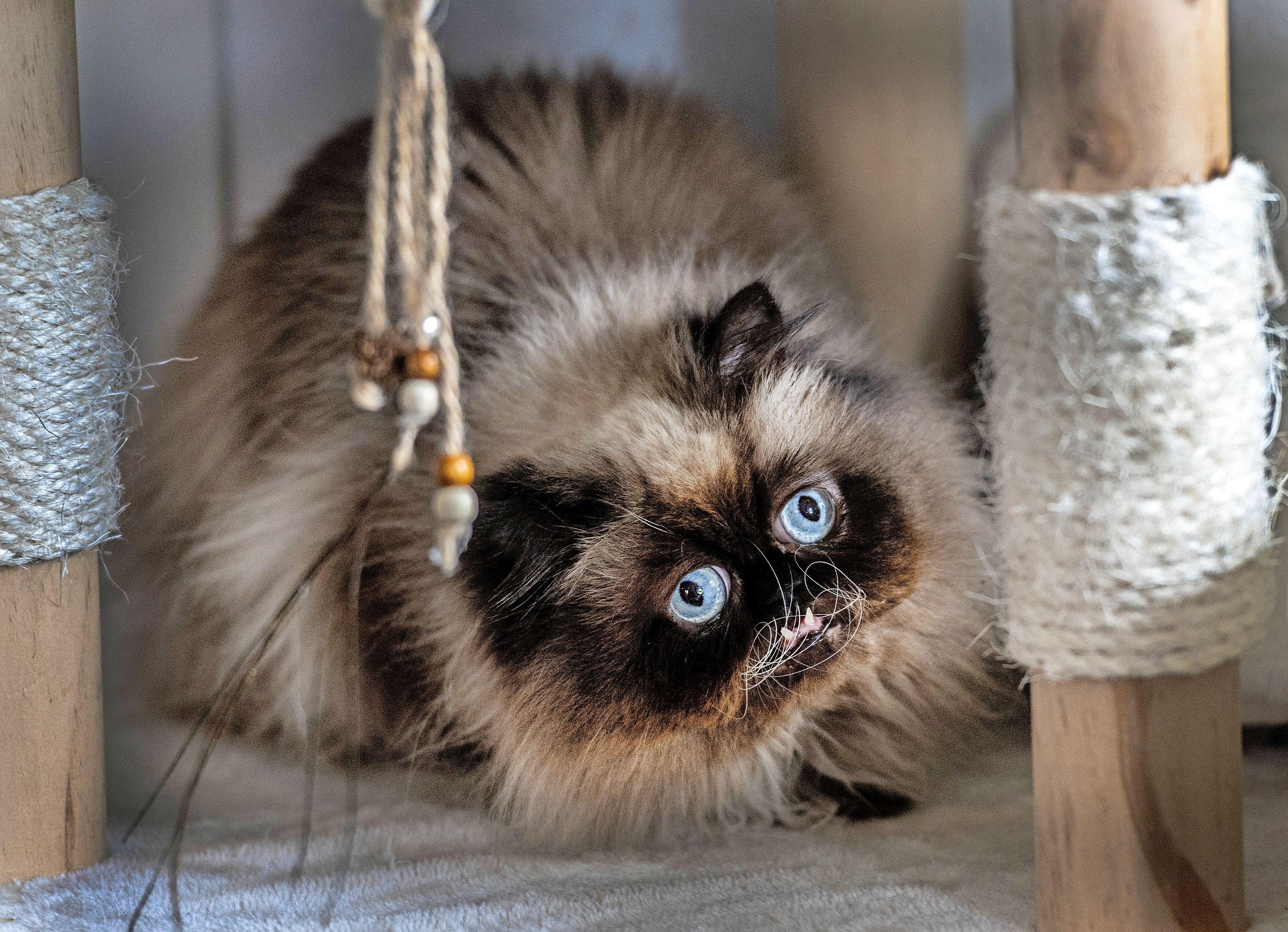 Gekke kat is Instagrambekendheid: 'Ik had geen idee dat kattenfoto's zoveel teweeg konden brengen'