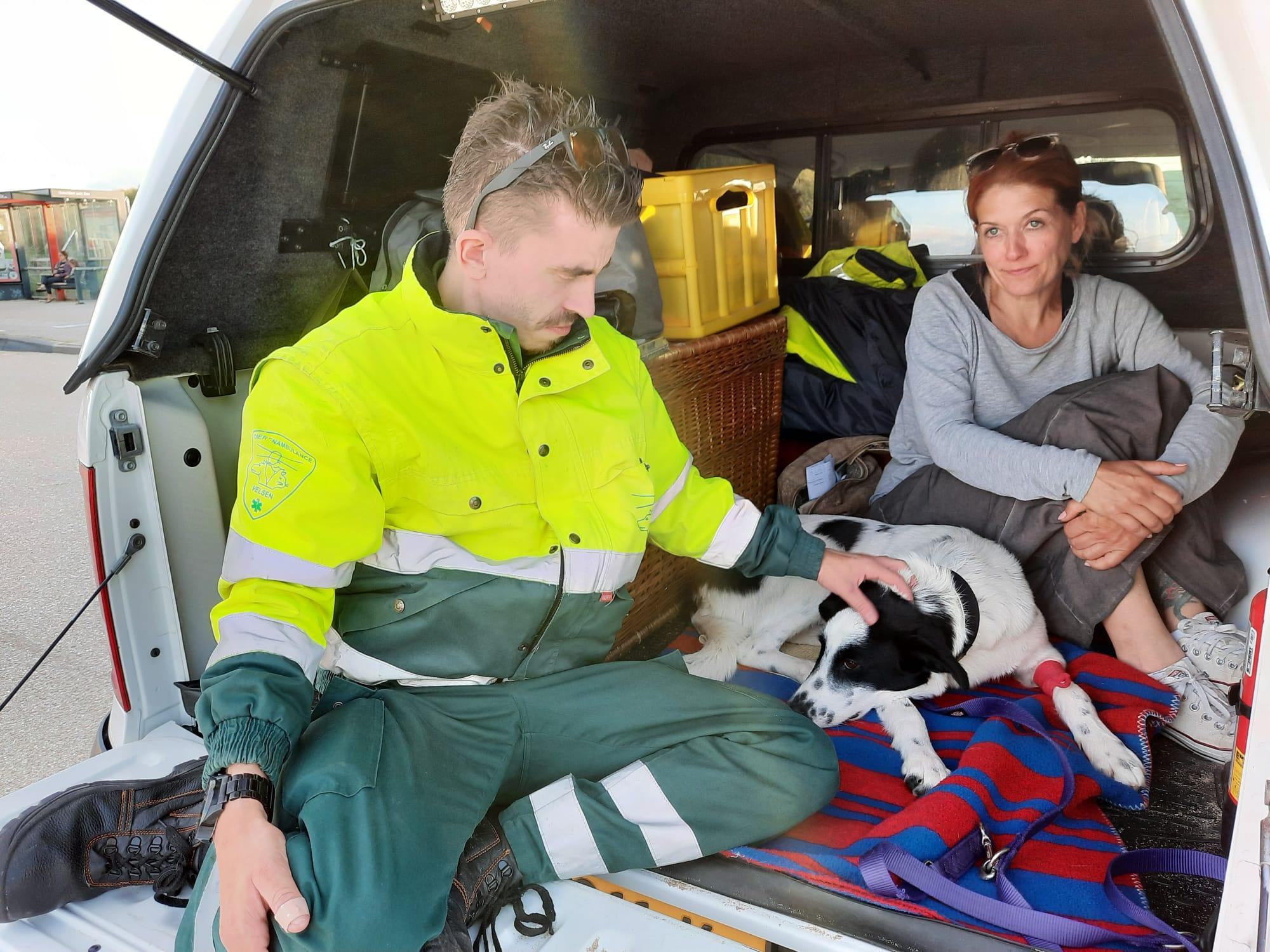 Velsense redders bevrijden viervoeter Gismo van grote vishaak in voorpoot: hondje van vakantievierende Engelse komt met schrik vrij, na pijnlijk avontuur op strand