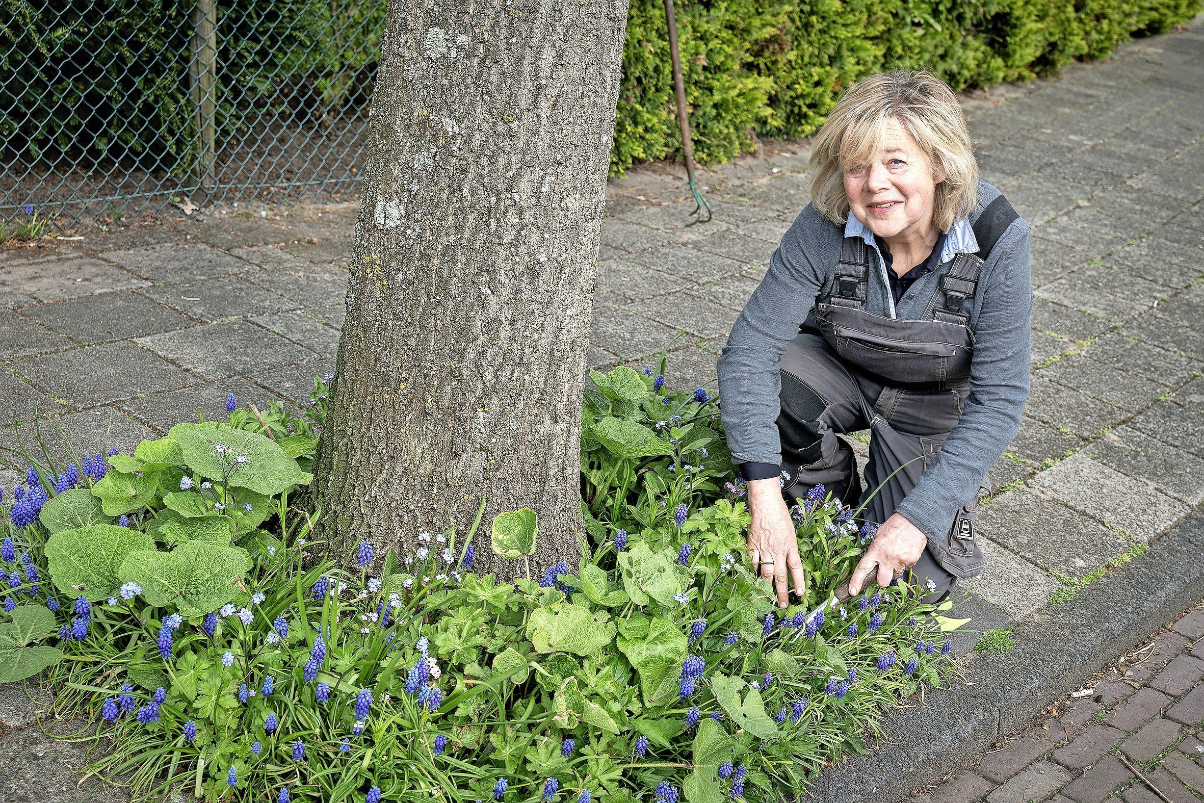 Jeanine van Ooijen was wel klaar in haar eigen tuin en werd guerillatuinierder: 'Het werkt besmettelijk, buren doen het nu ook'