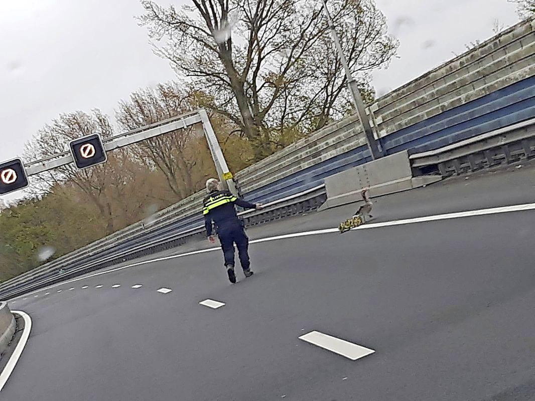 Politie zet A8 af voor familie ganzen, moeder laat jongen achter op snelweg